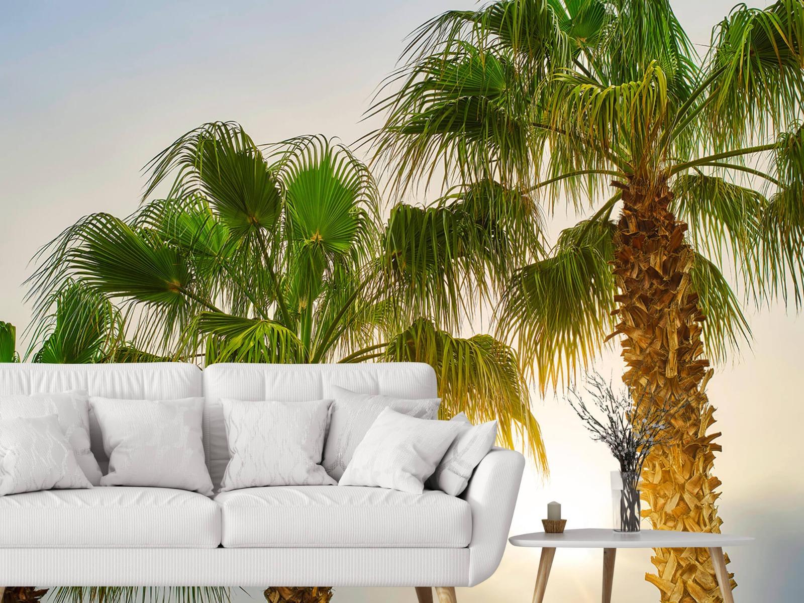 Palmbomen - Palmbomen met zon - Gang 3