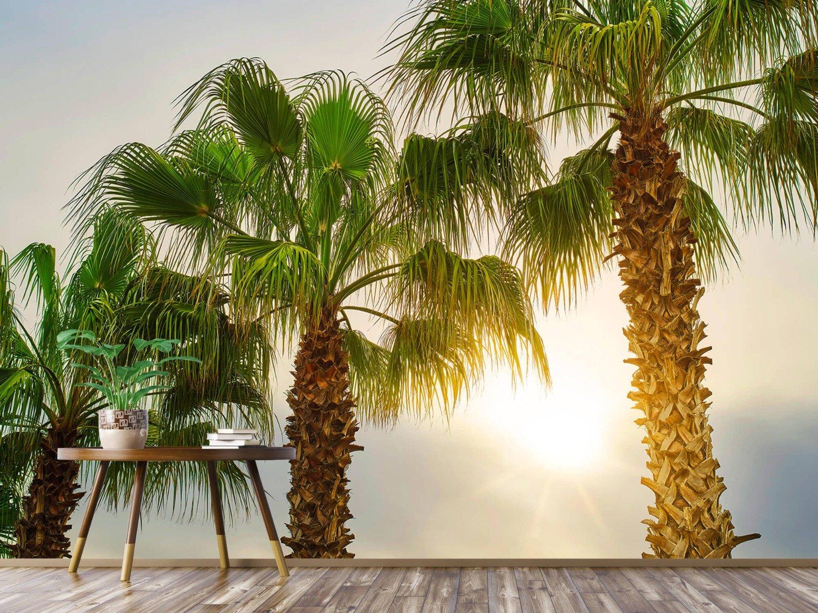 Palmbomen - Palmbomen met zon - Gang 4