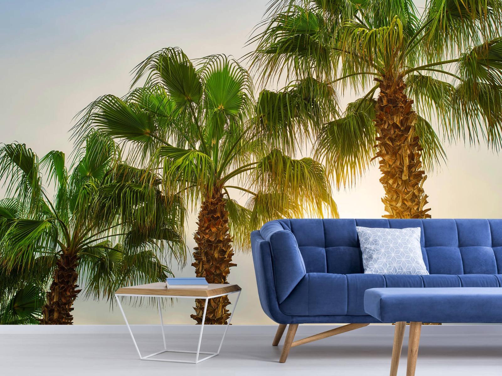 Palmbomen - Palmbomen met zon - Gang 5