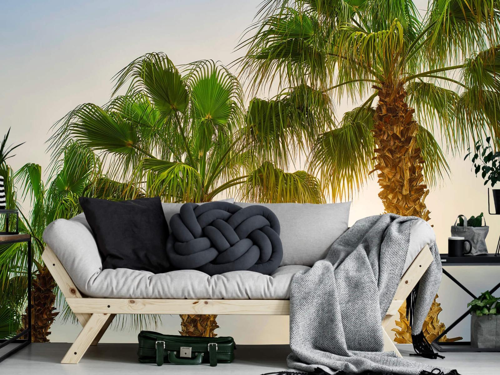 Palmbomen - Palmbomen met zon - Gang 7