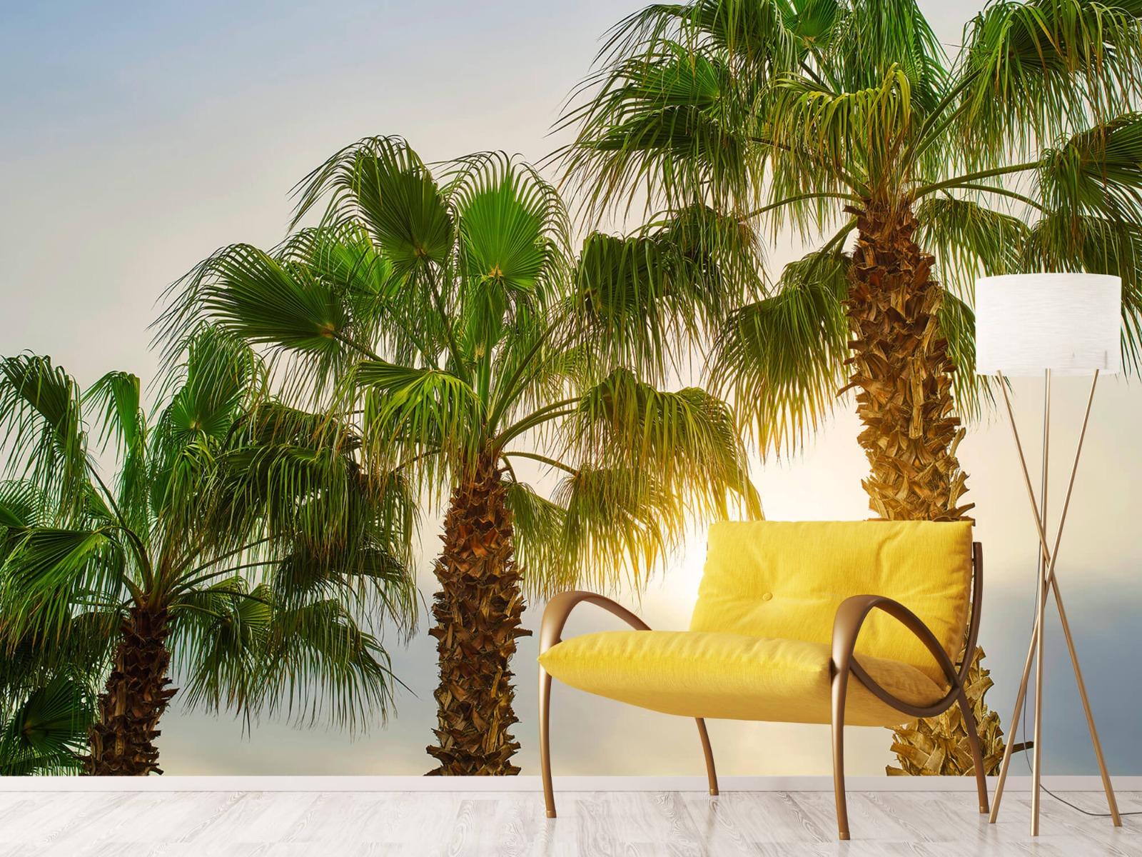 Palmbomen - Palmbomen met zon - Gang 11