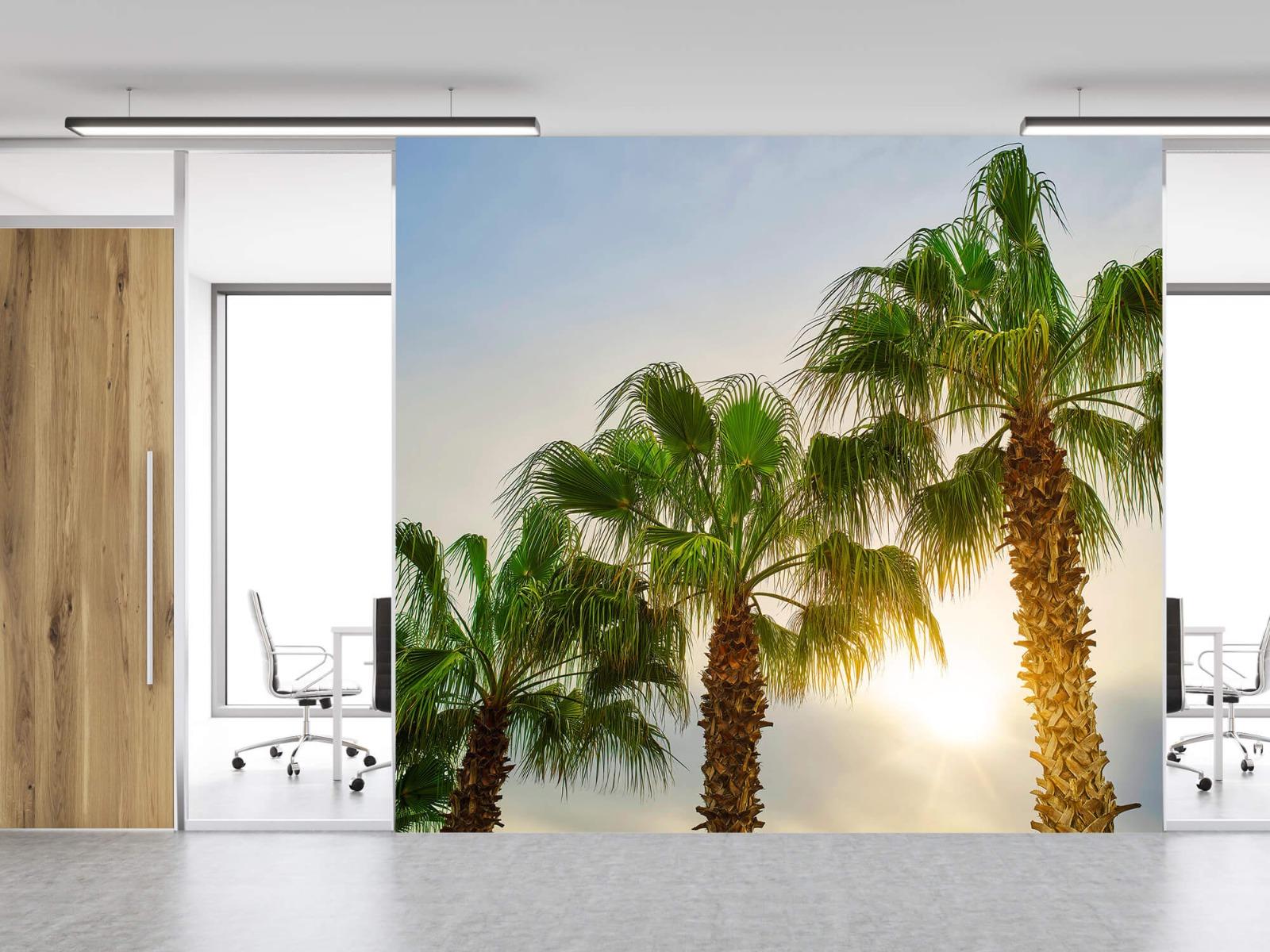 Palmbomen - Palmbomen met zon - Gang 12