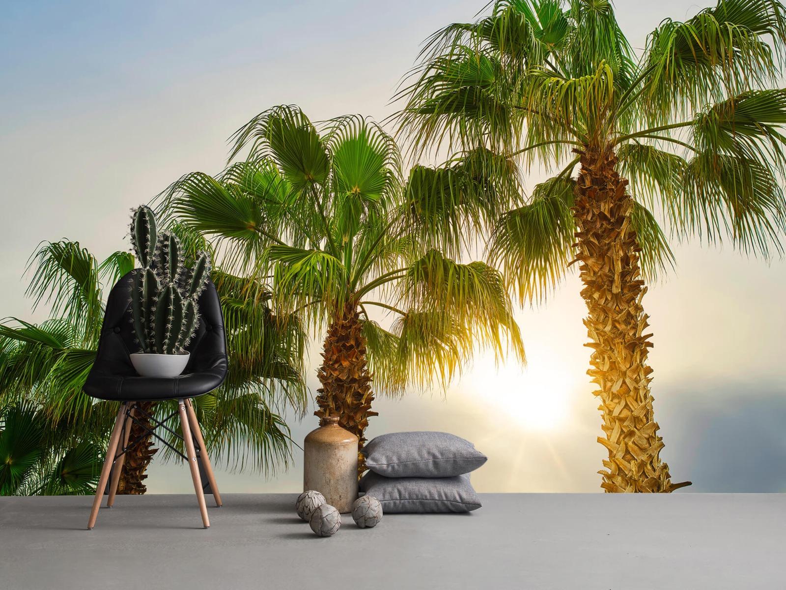 Palmbomen - Palmbomen met zon - Gang 1