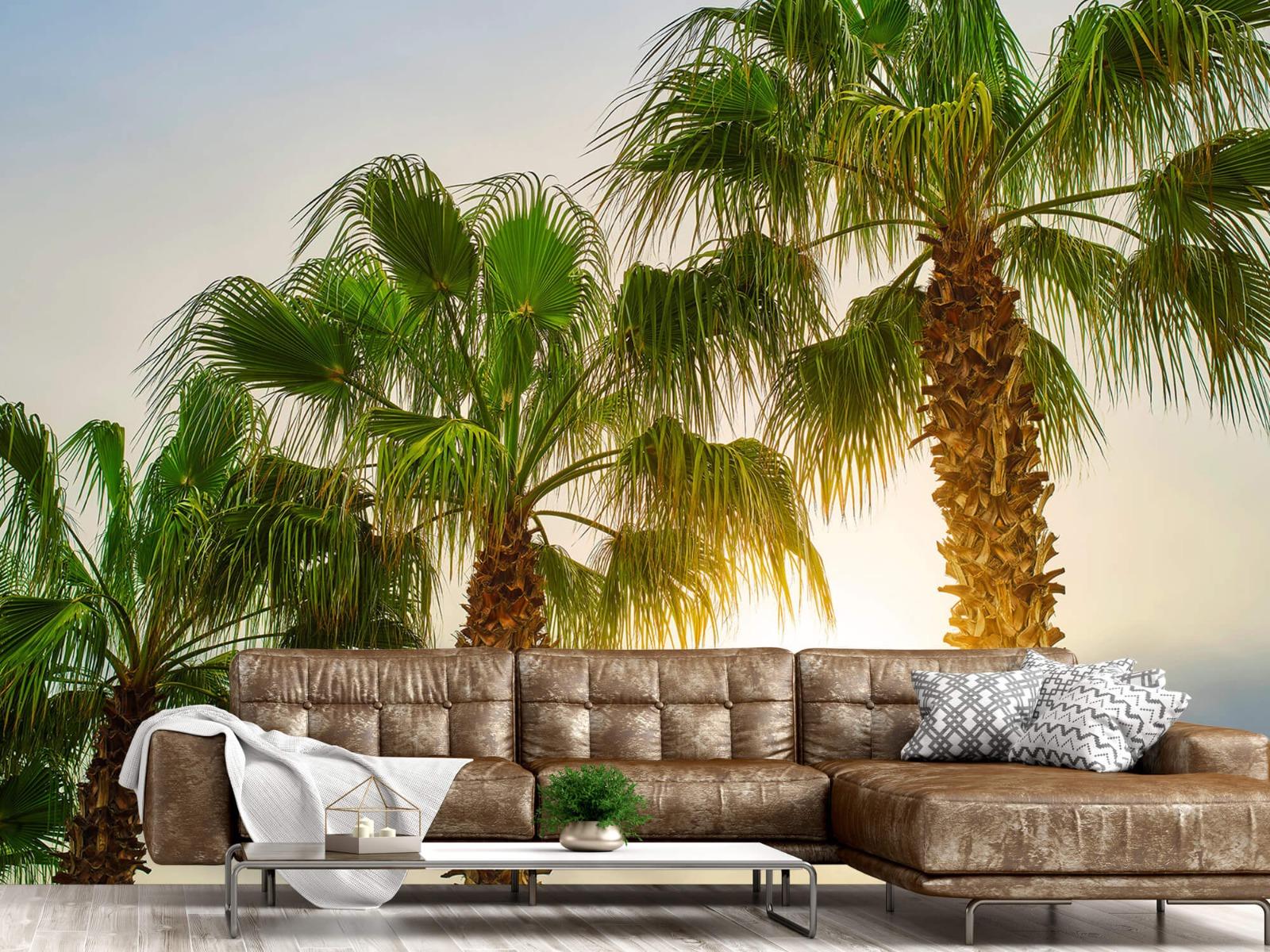 Palmbomen - Palmbomen met zon - Gang 14