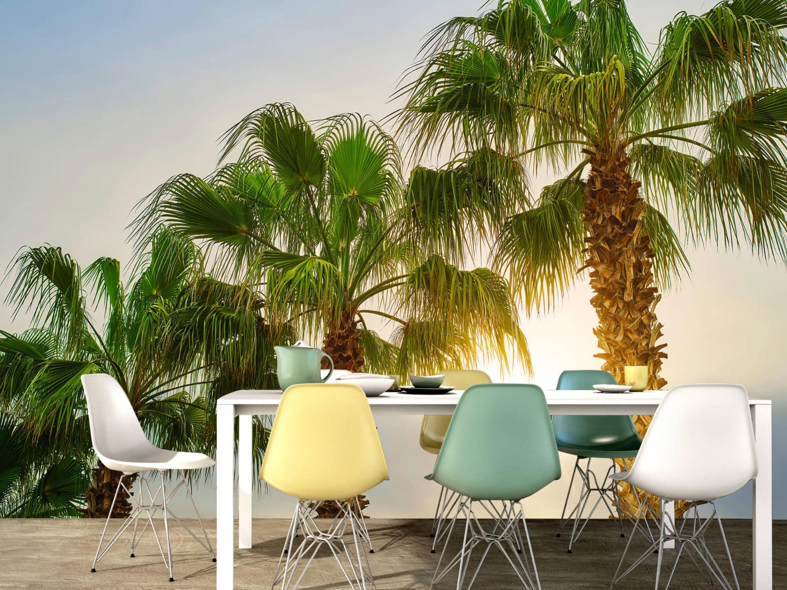 Palmbomen - Palmbomen met zon - Gang 15
