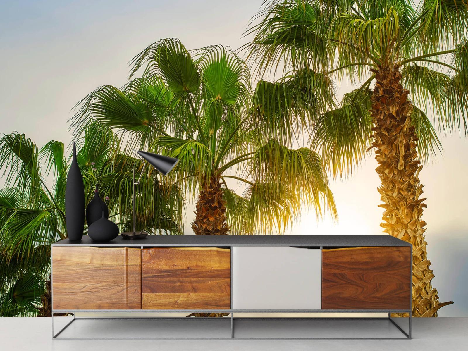 Palmbomen - Palmbomen met zon - Gang 16