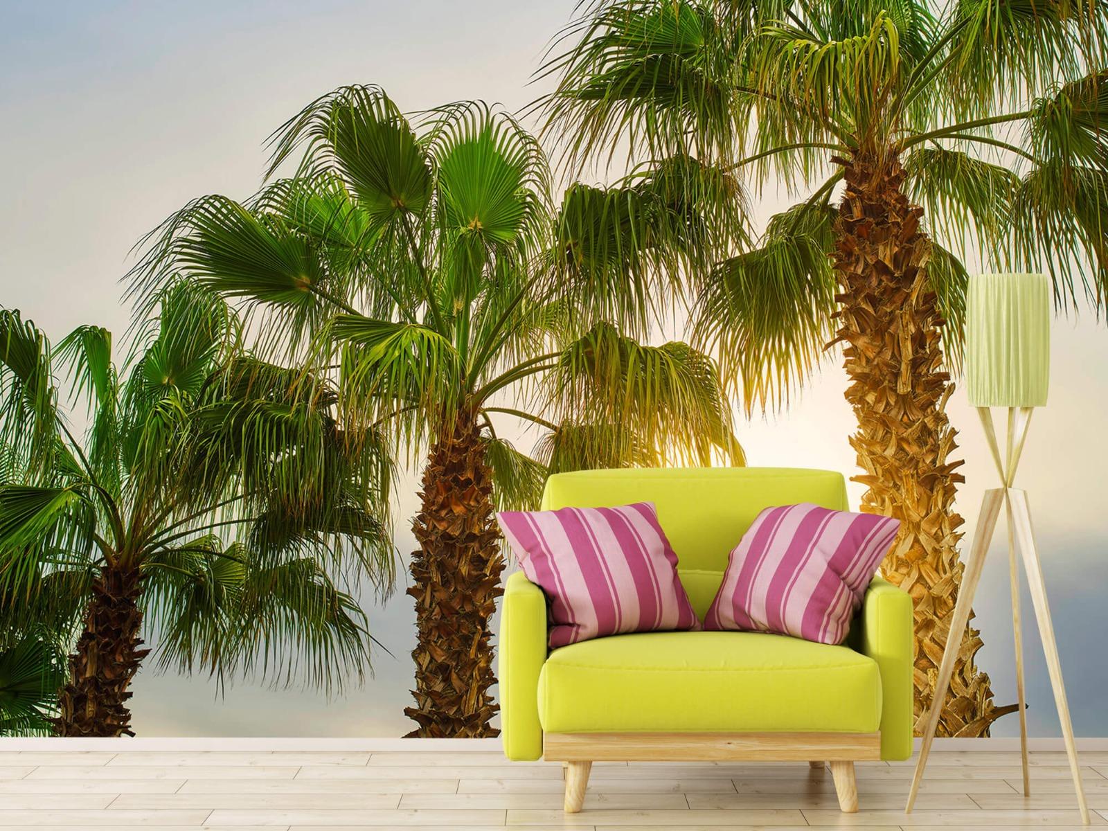 Palmbomen - Palmbomen met zon - Gang 17