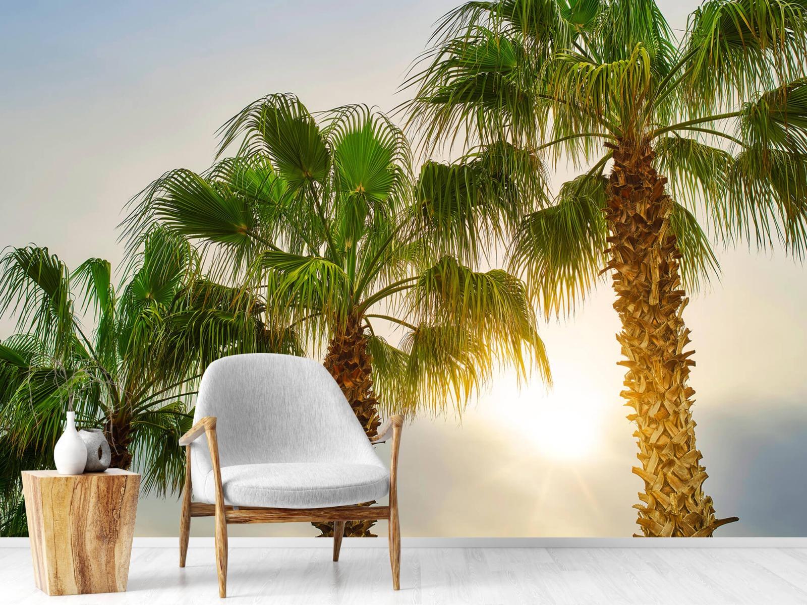 Palmbomen - Palmbomen met zon - Gang 18