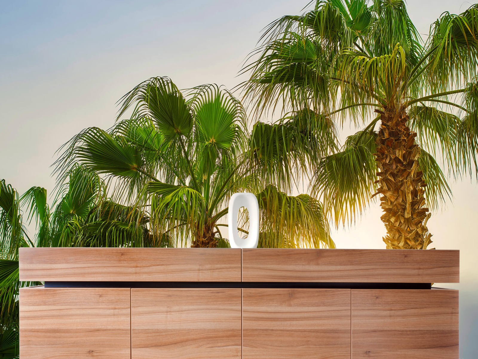Palmbomen - Palmbomen met zon - Gang 20