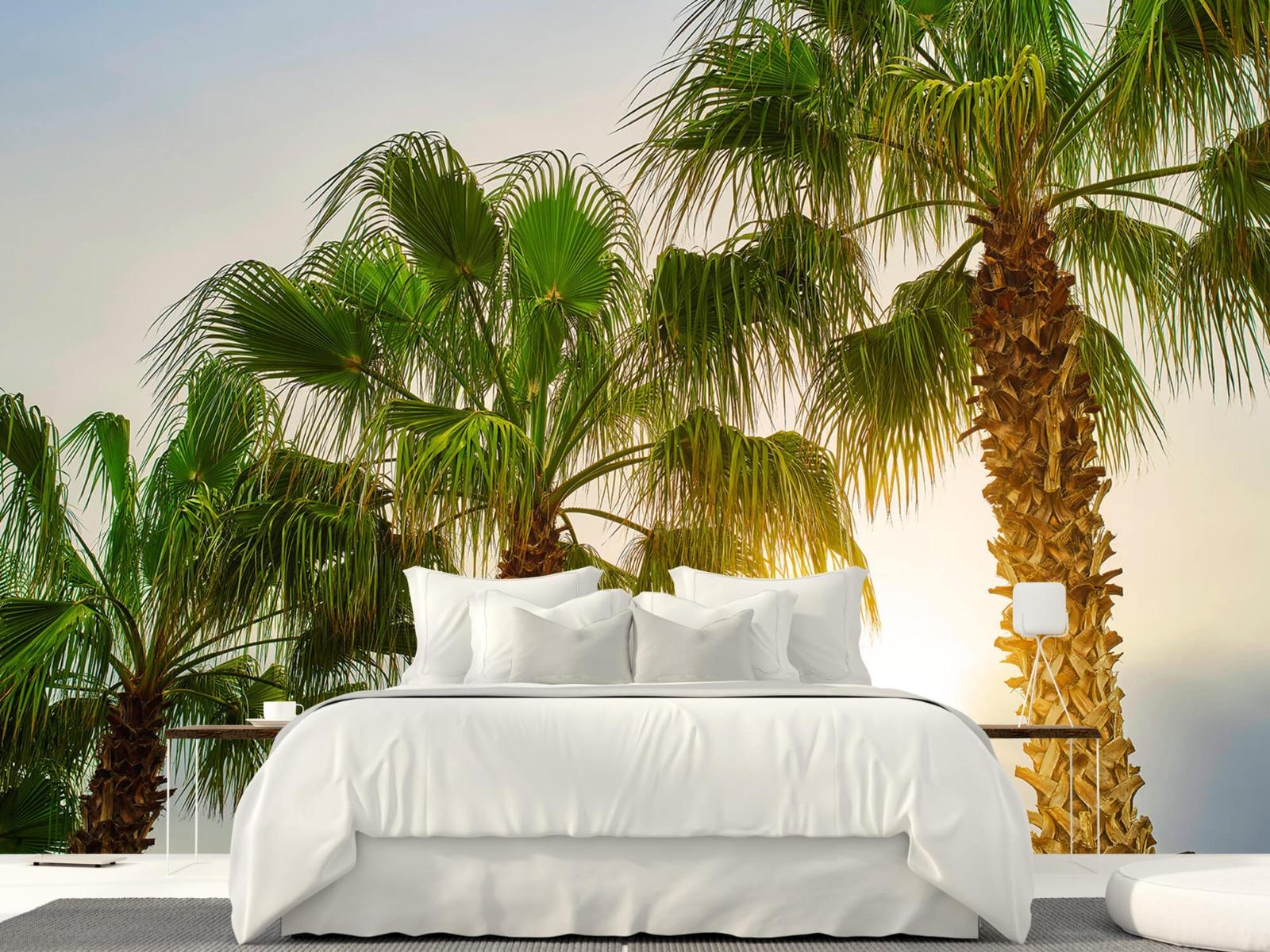 Palmbomen - Palmbomen met zon - Gang 23