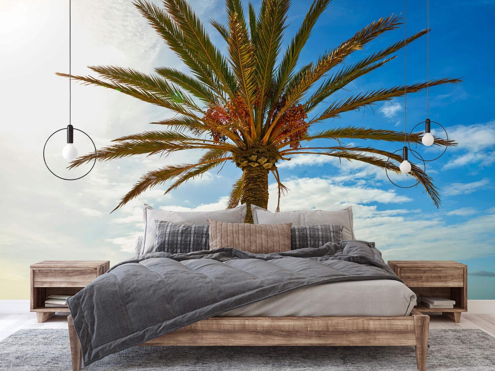 Palmbomen - Mooie palmboom - Keuken 2