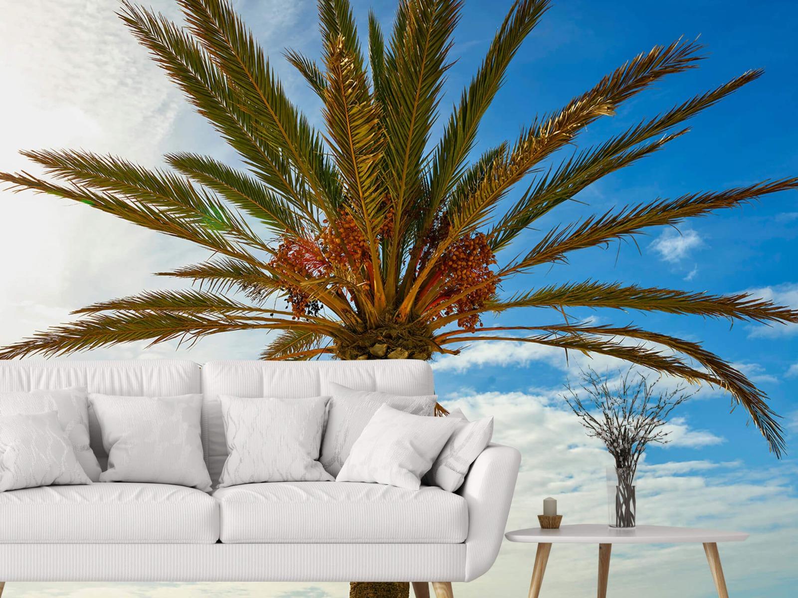 Palmbomen - Mooie palmboom - Keuken 3