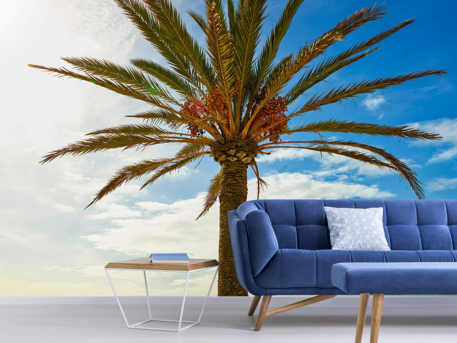 Palmbomen - Mooie palmboom - Keuken 5