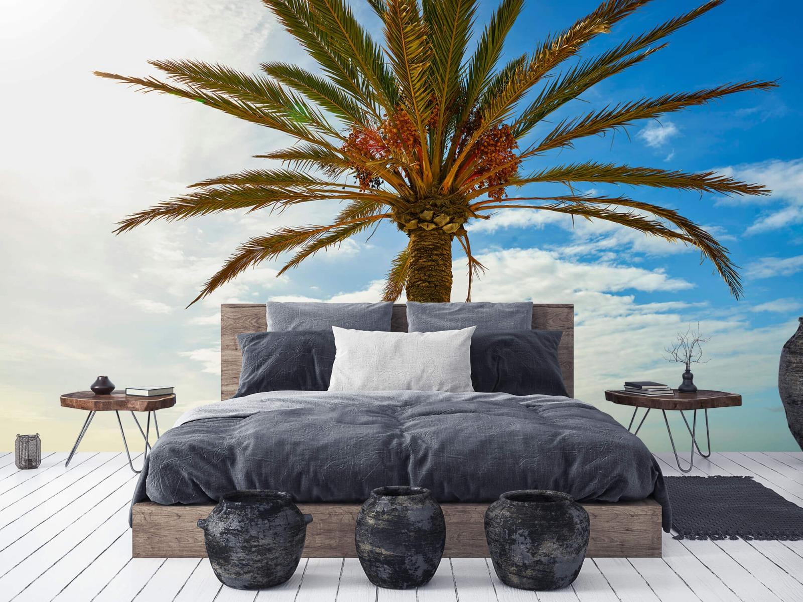 Palmbomen - Mooie palmboom - Keuken 6