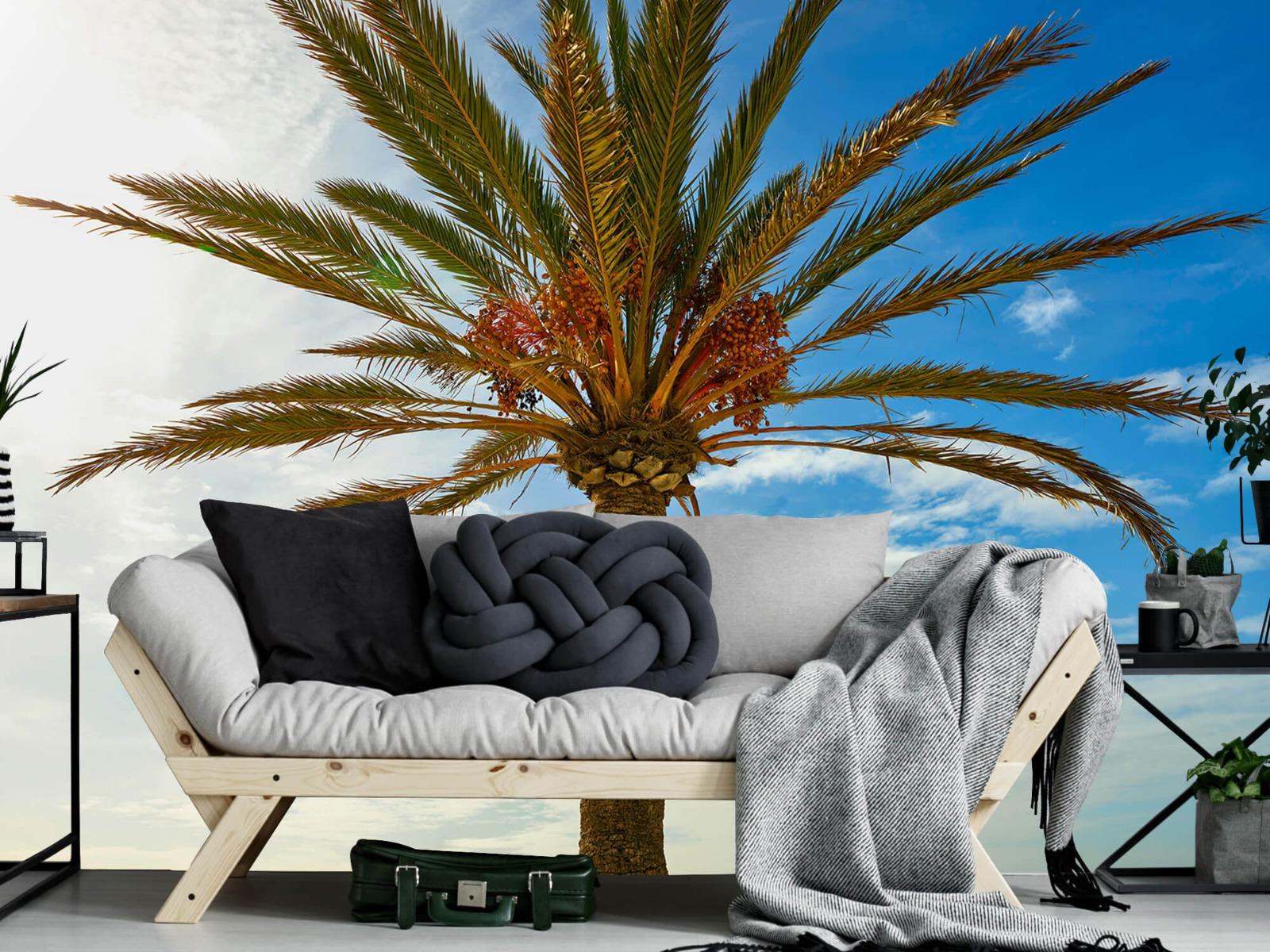 Palmbomen - Mooie palmboom - Keuken 7