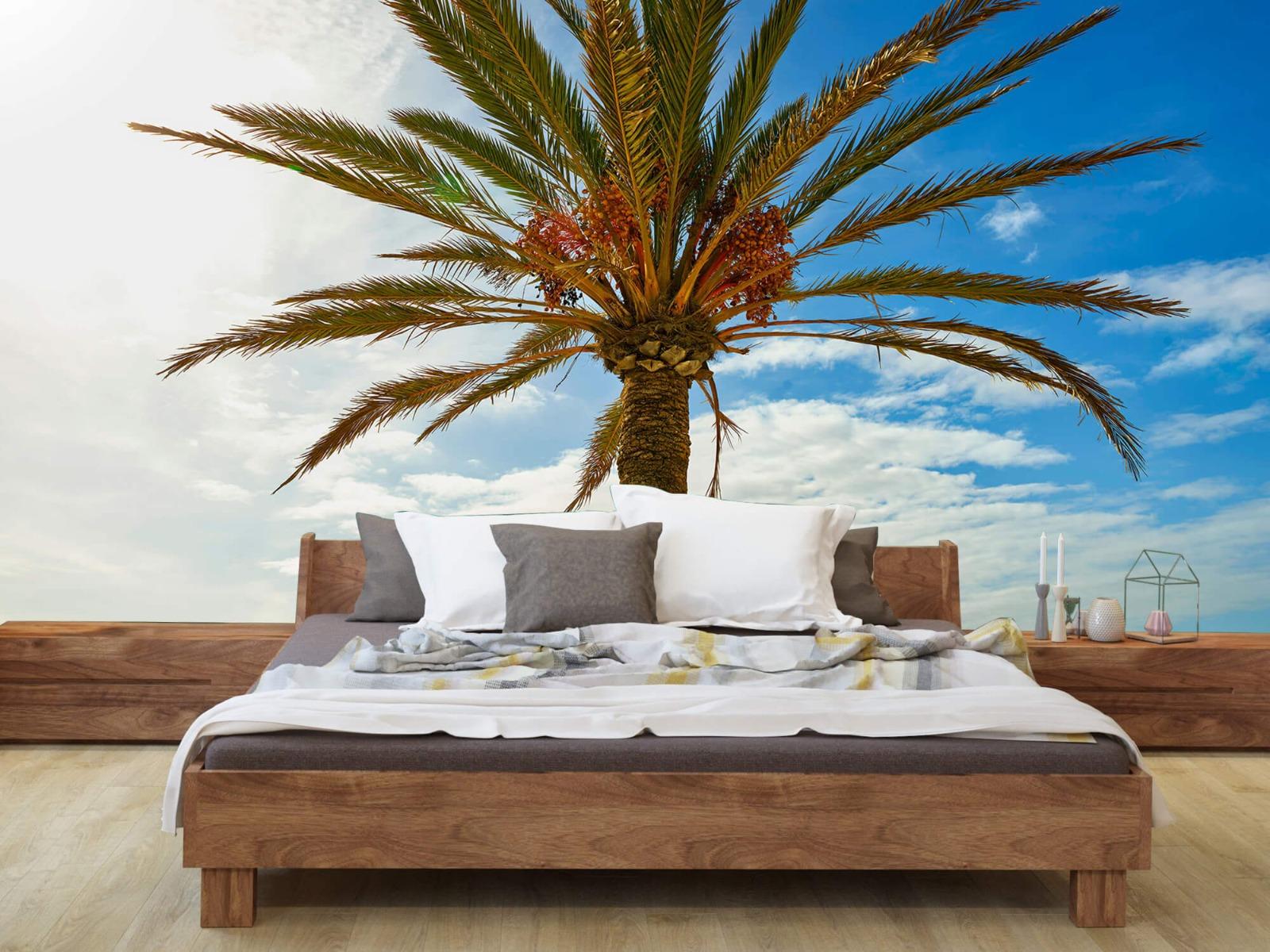 Palmbomen - Mooie palmboom - Keuken 1