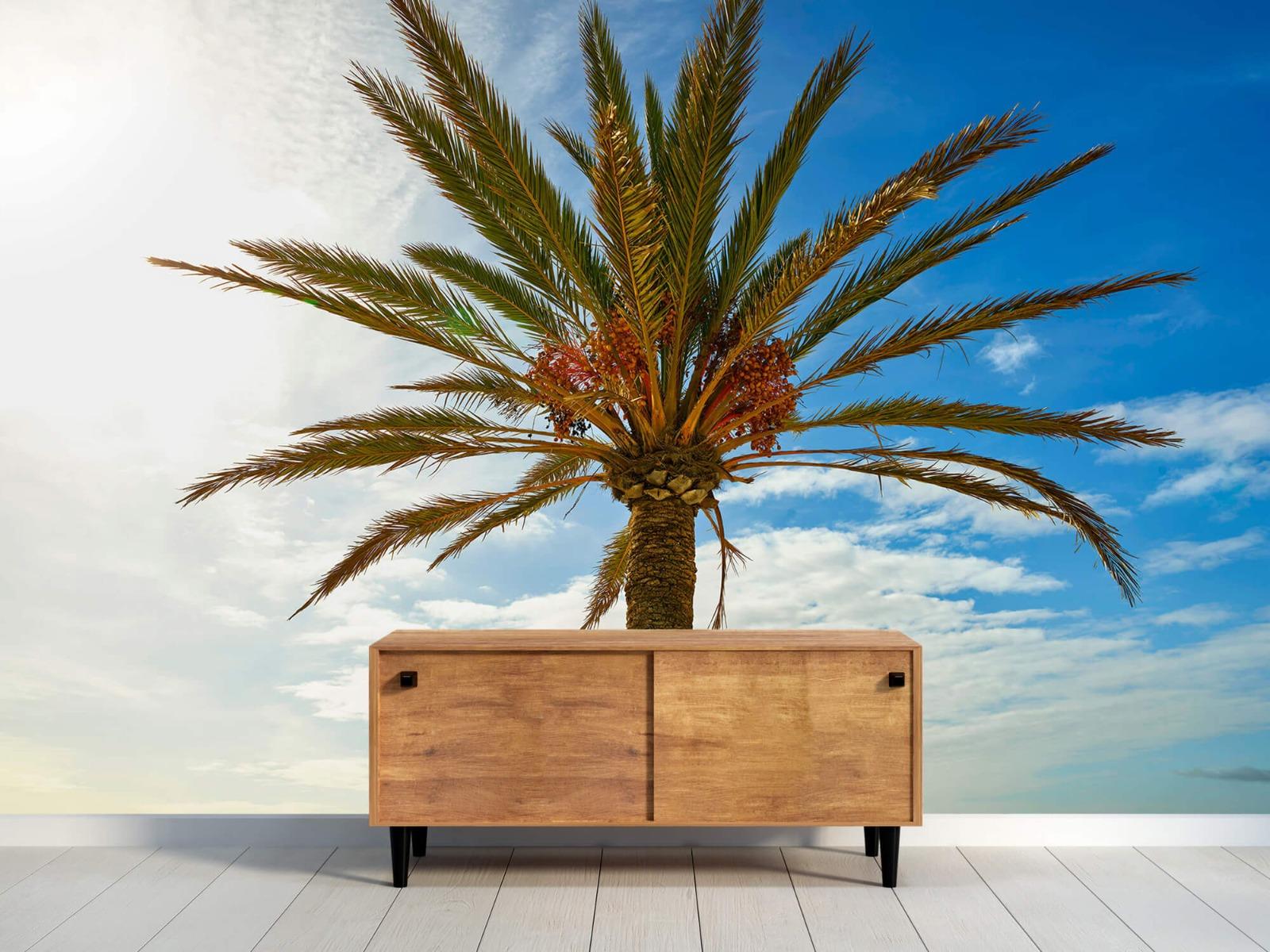 Palmbomen - Mooie palmboom - Keuken 9