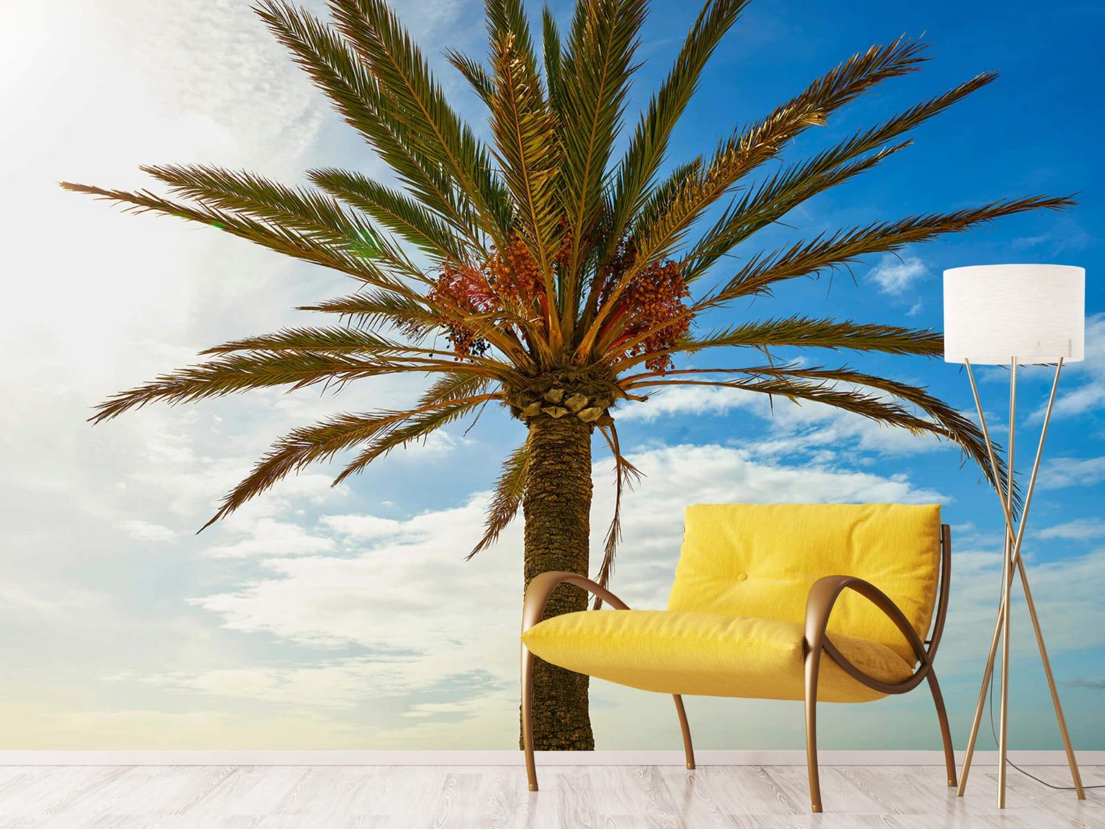 Palmbomen - Mooie palmboom - Keuken 10