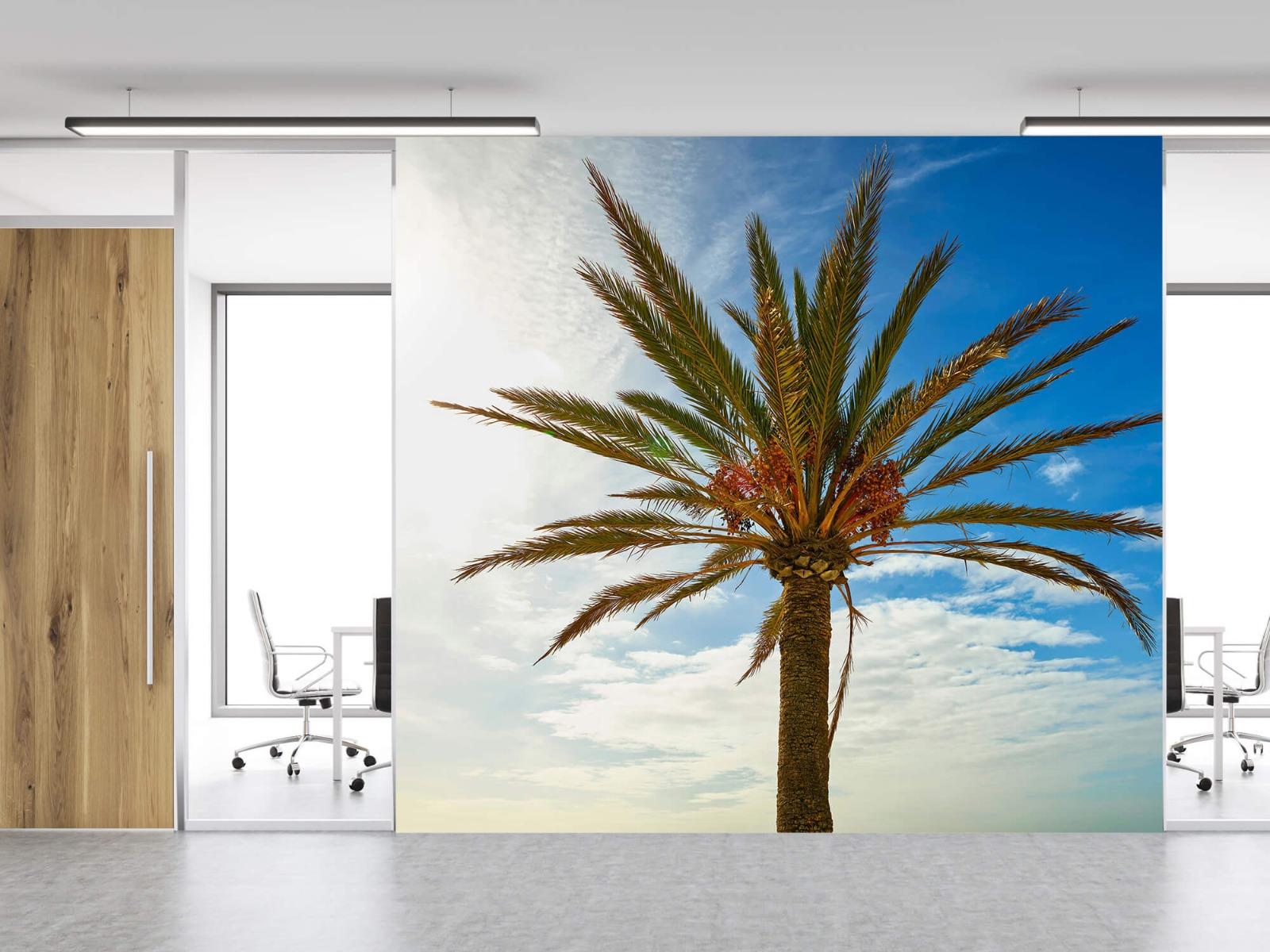 Palmbomen - Mooie palmboom - Keuken 11