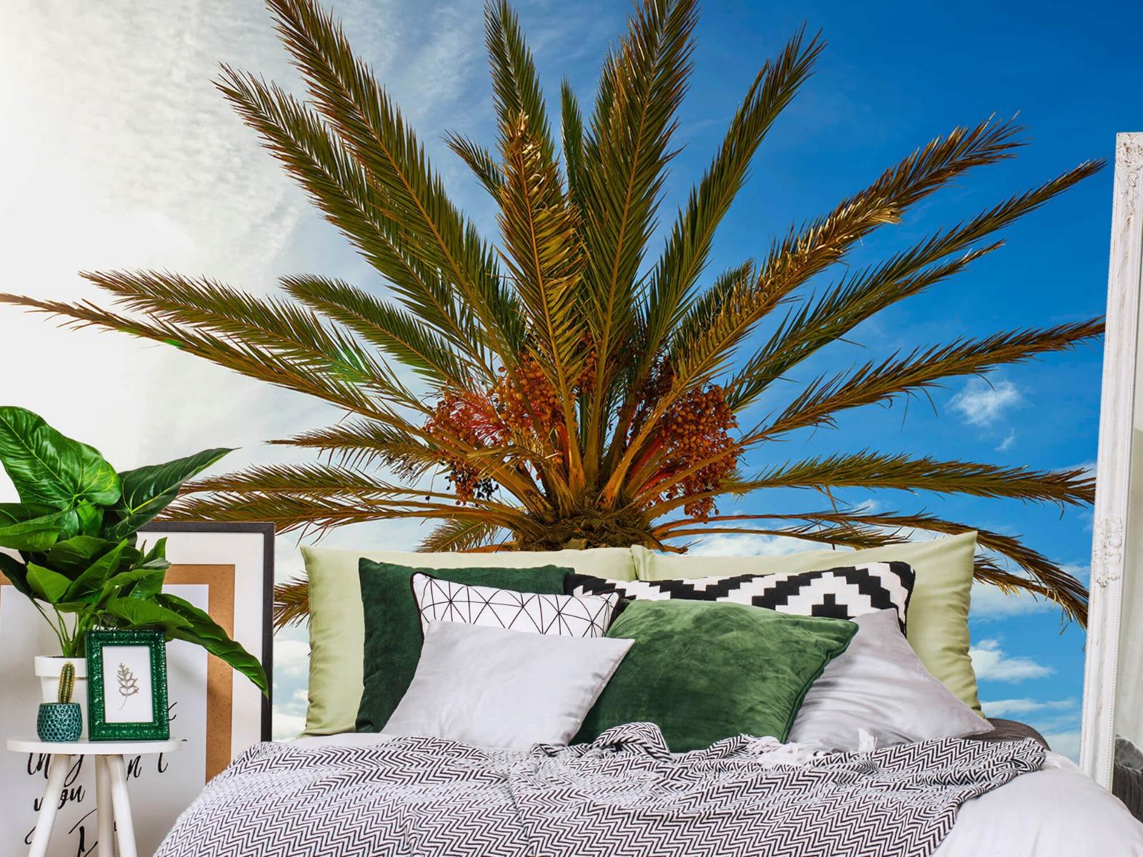 Palmbomen - Mooie palmboom - Keuken 12