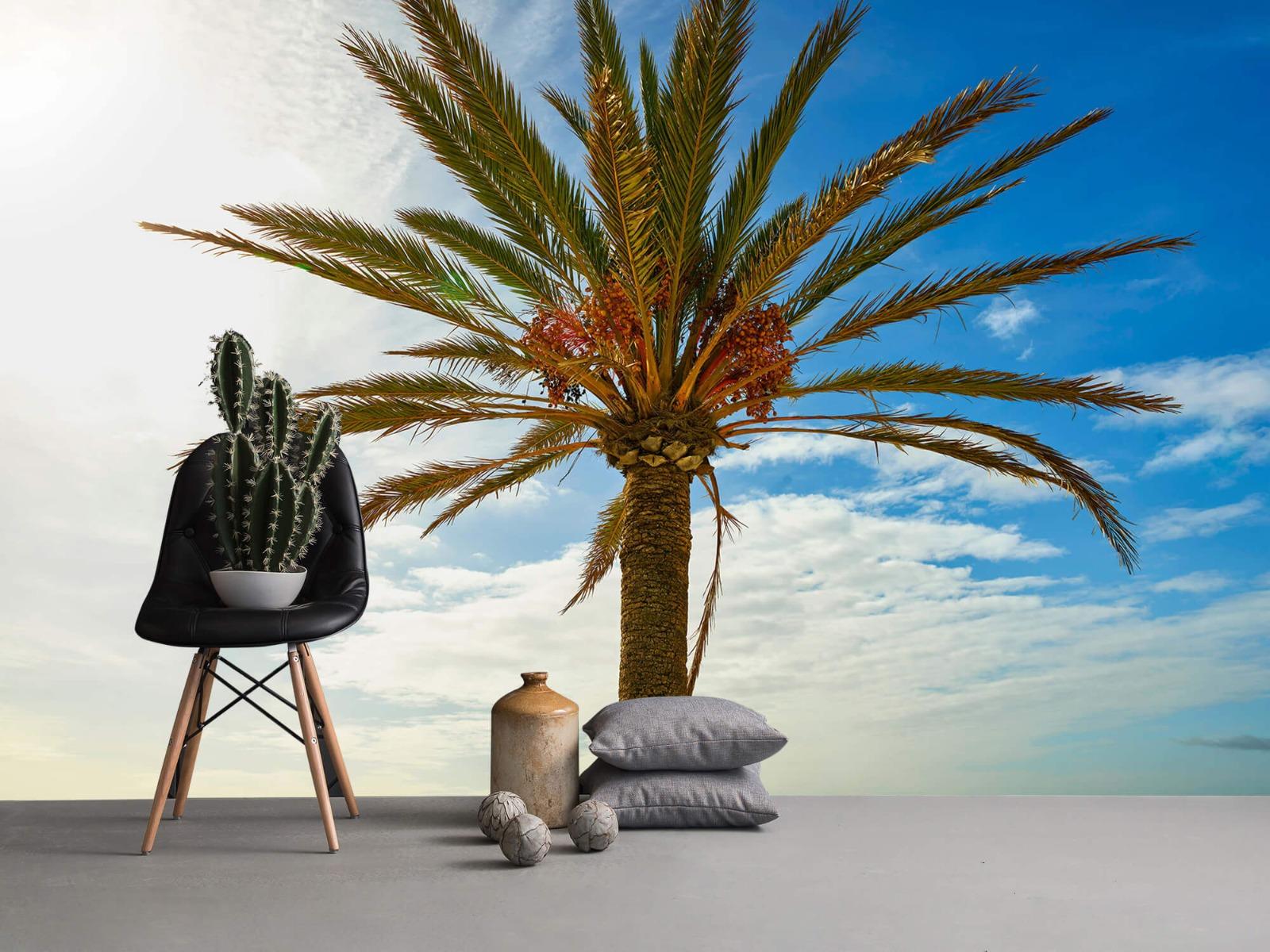 Palmbomen - Mooie palmboom - Keuken 13
