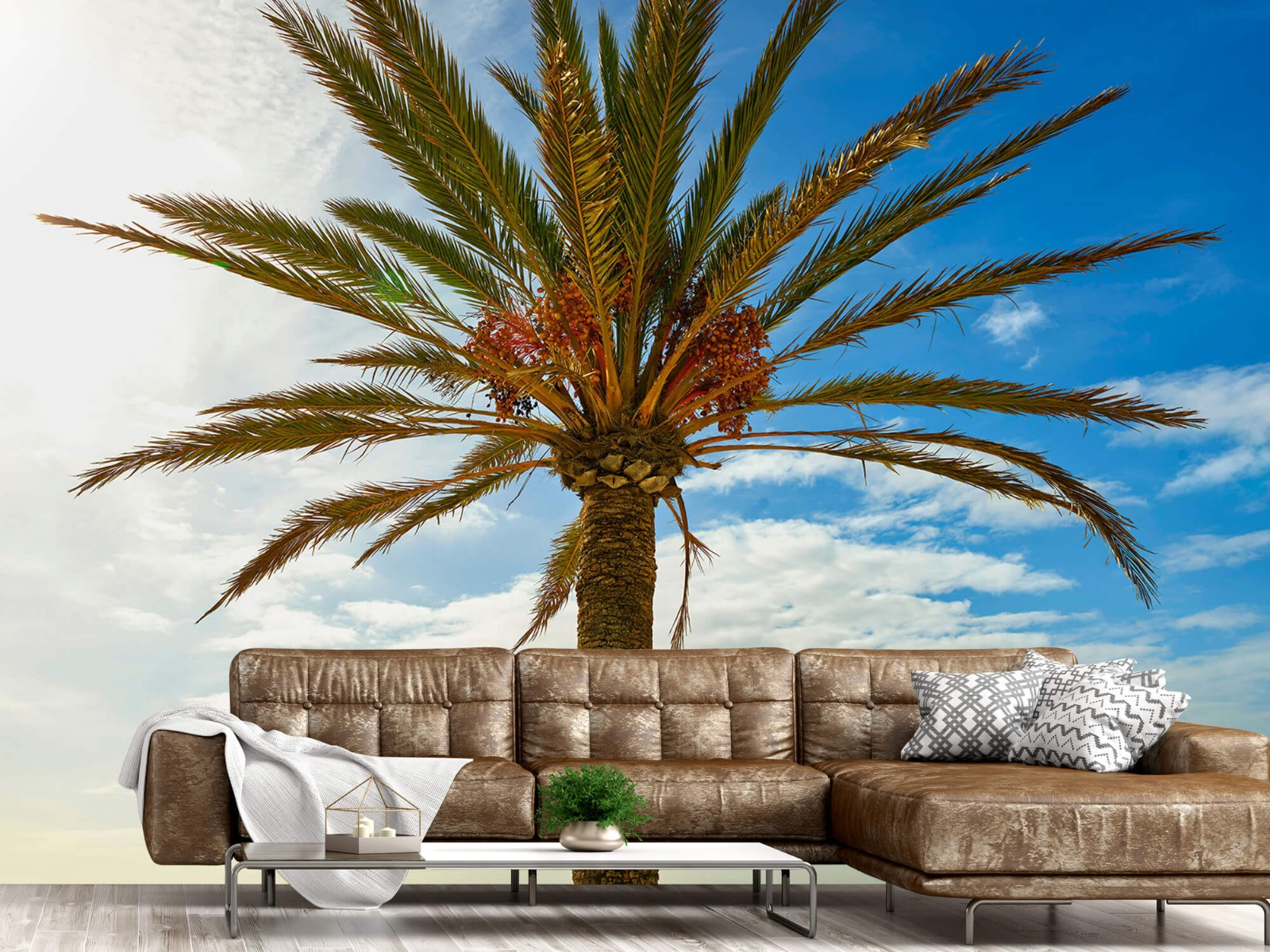 Palmbomen - Mooie palmboom - Keuken 14