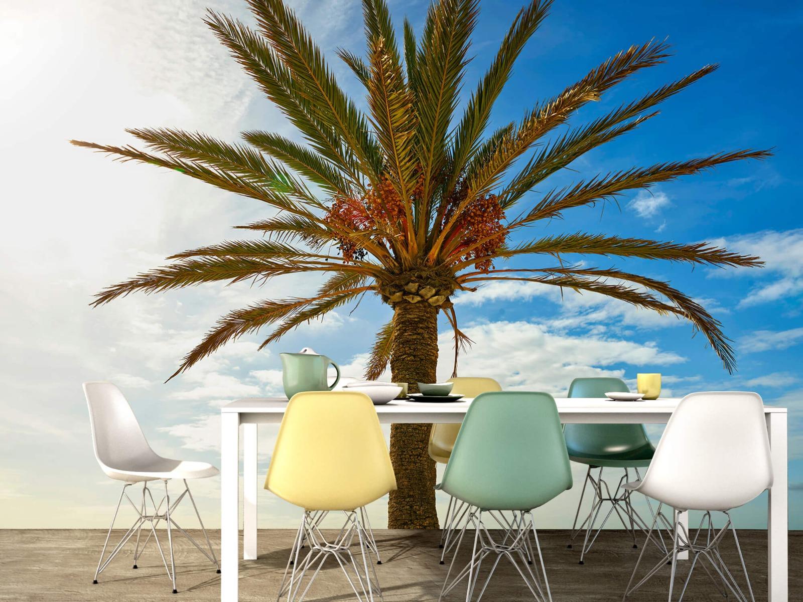 Palmbomen - Mooie palmboom - Keuken 15