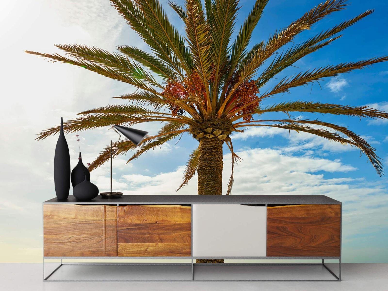 Palmbomen - Mooie palmboom - Keuken 16