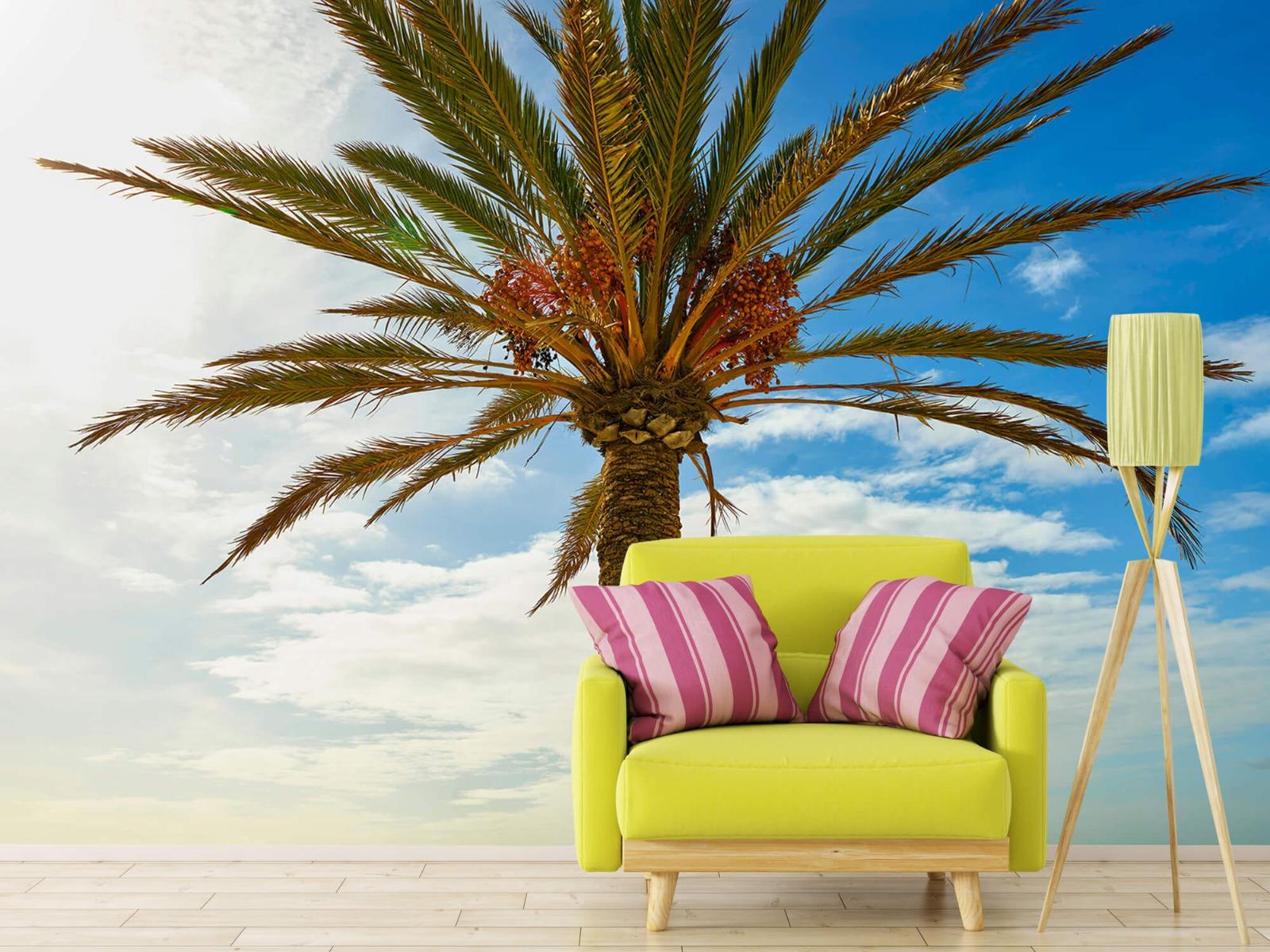 Palmbomen - Mooie palmboom - Keuken 17