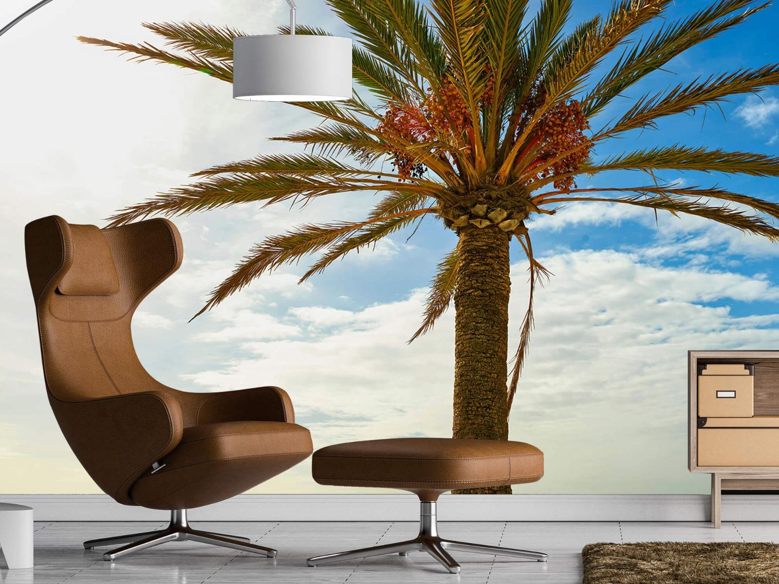 Palmbomen - Mooie palmboom - Keuken 19