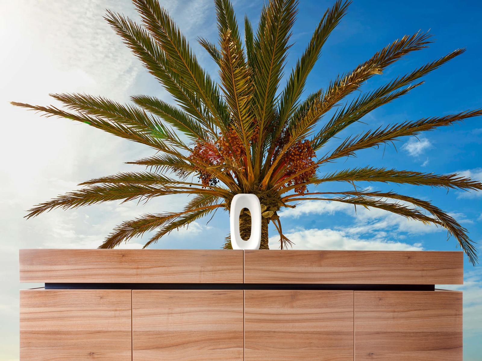 Palmbomen - Mooie palmboom - Keuken 20