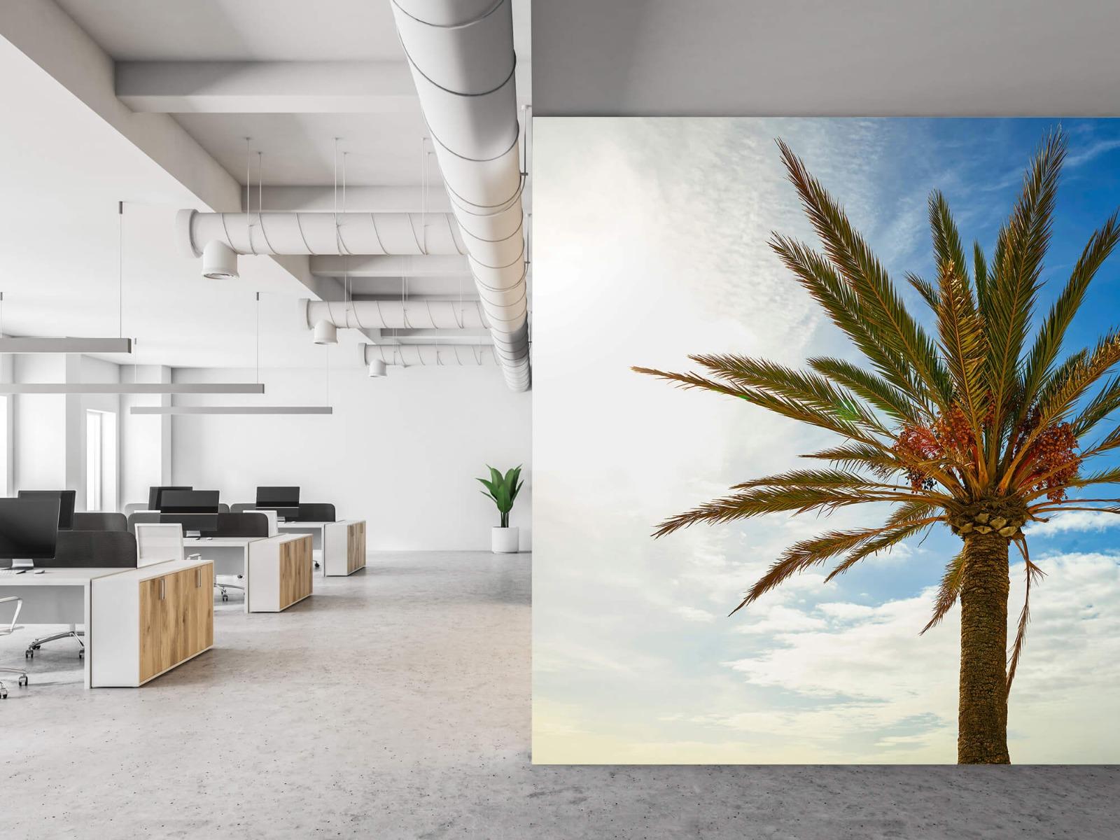 Palmbomen - Mooie palmboom - Keuken 21