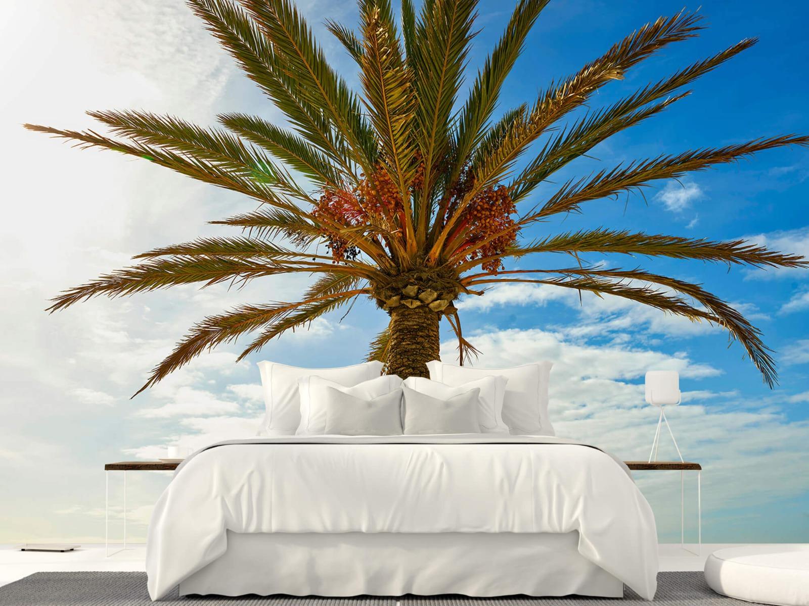 Palmbomen - Mooie palmboom - Keuken 23