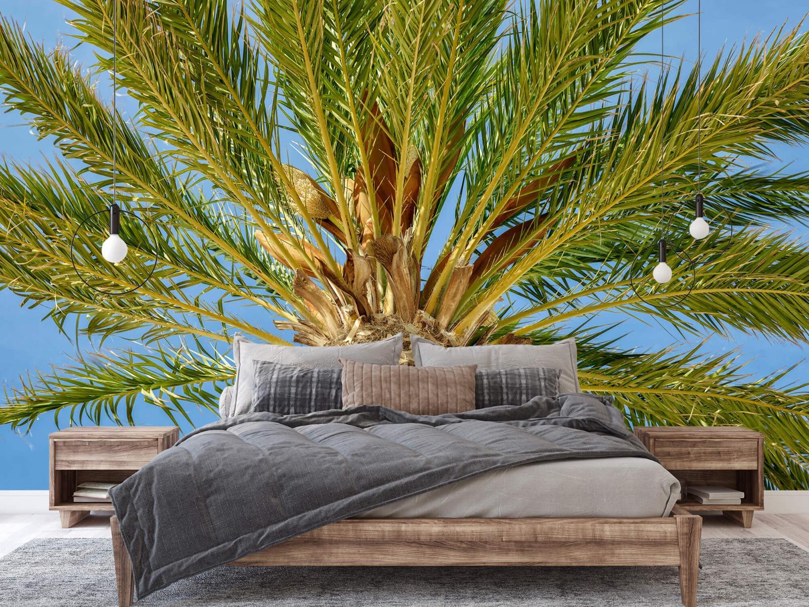 Palmbomen - Tropische palmboom - Tienerkamer 1