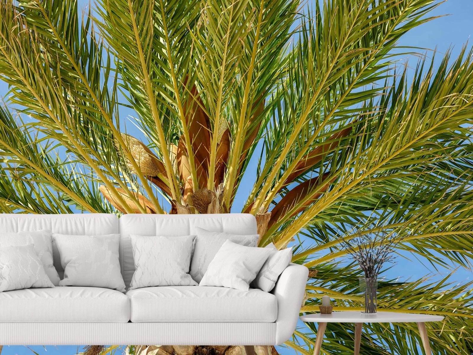 Palmbomen - Tropische palmboom - Tienerkamer 2