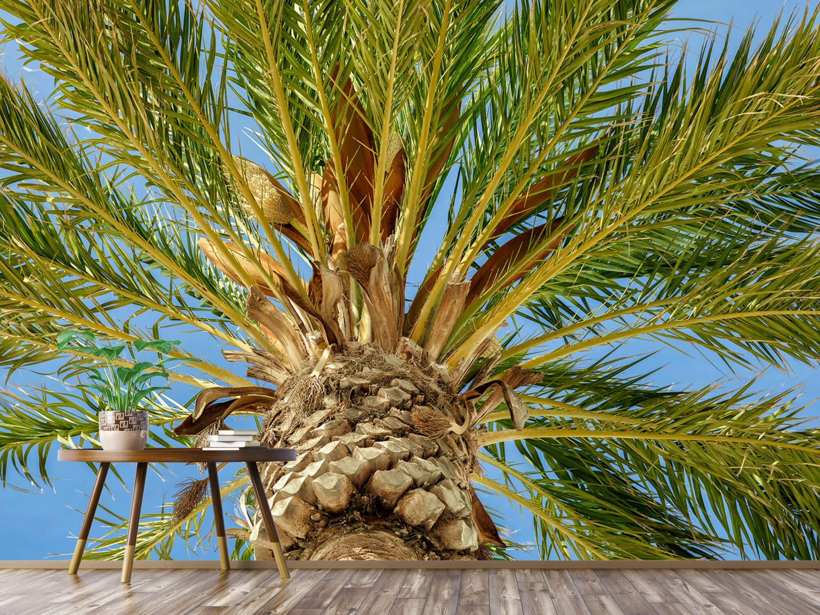 Palmbomen - Tropische palmboom - Tienerkamer 3