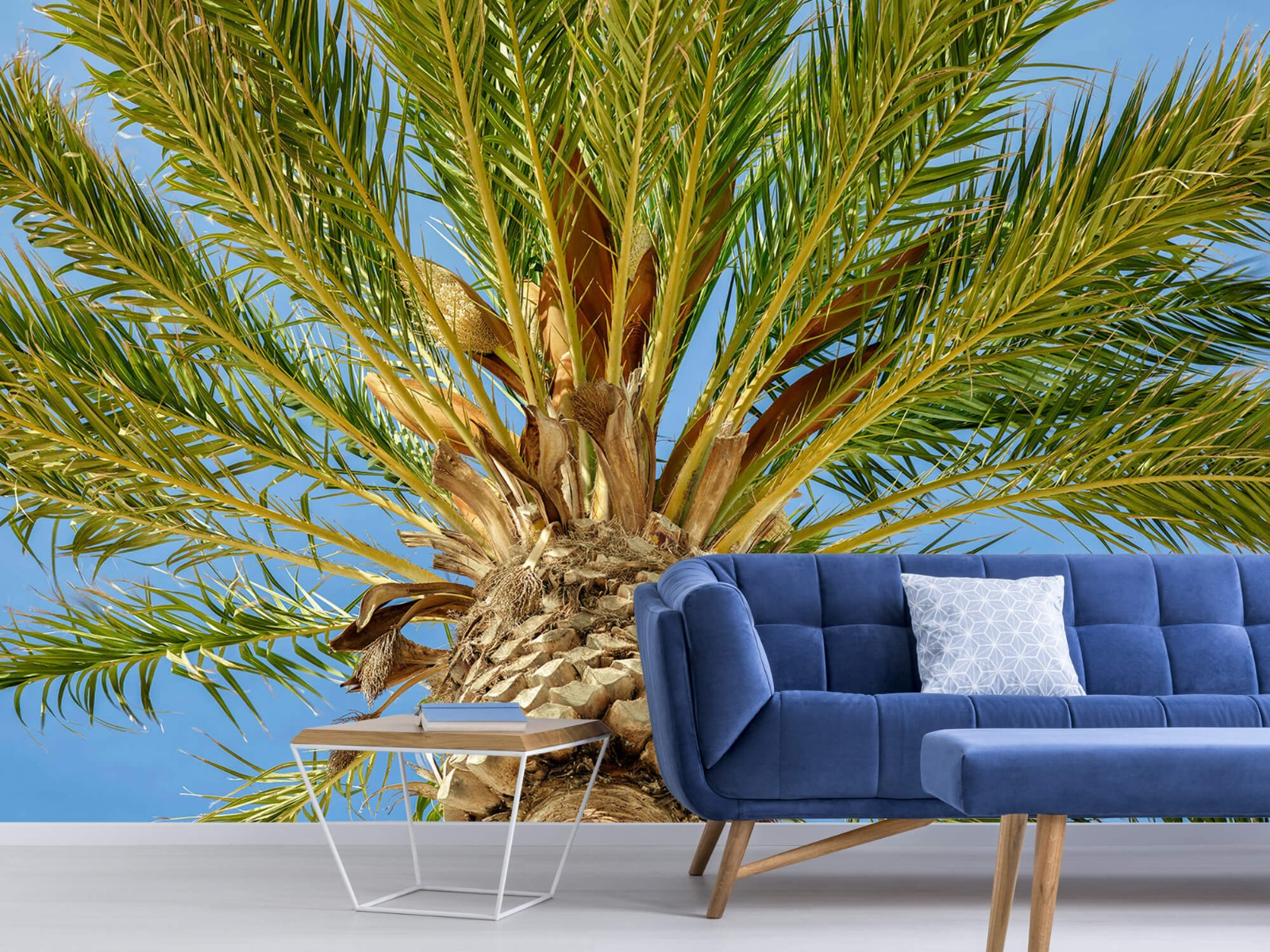 Palmbomen - Tropische palmboom - Tienerkamer 4
