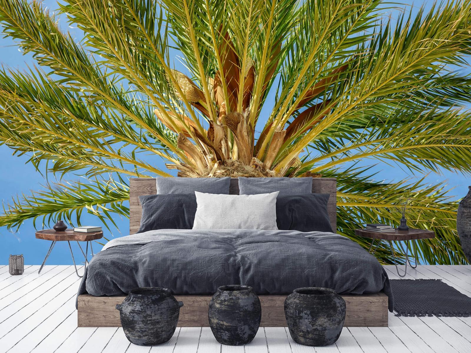 Palmbomen - Tropische palmboom - Tienerkamer 5