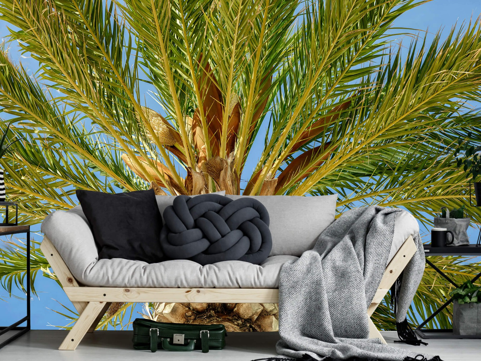 Palmbomen - Tropische palmboom - Tienerkamer 6
