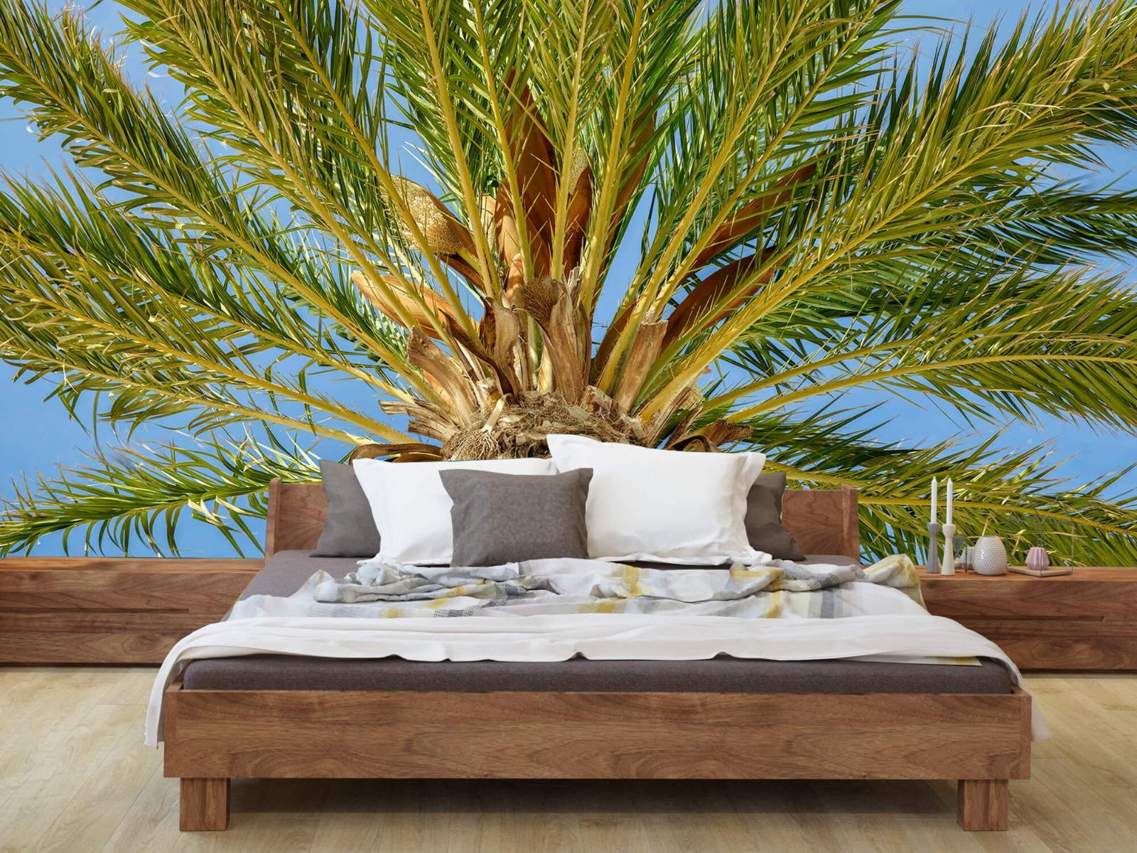 Palmbomen - Tropische palmboom - Tienerkamer 7