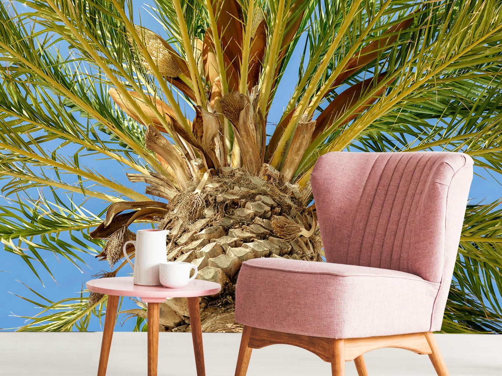 Palmbomen - Tropische palmboom - Tienerkamer 8