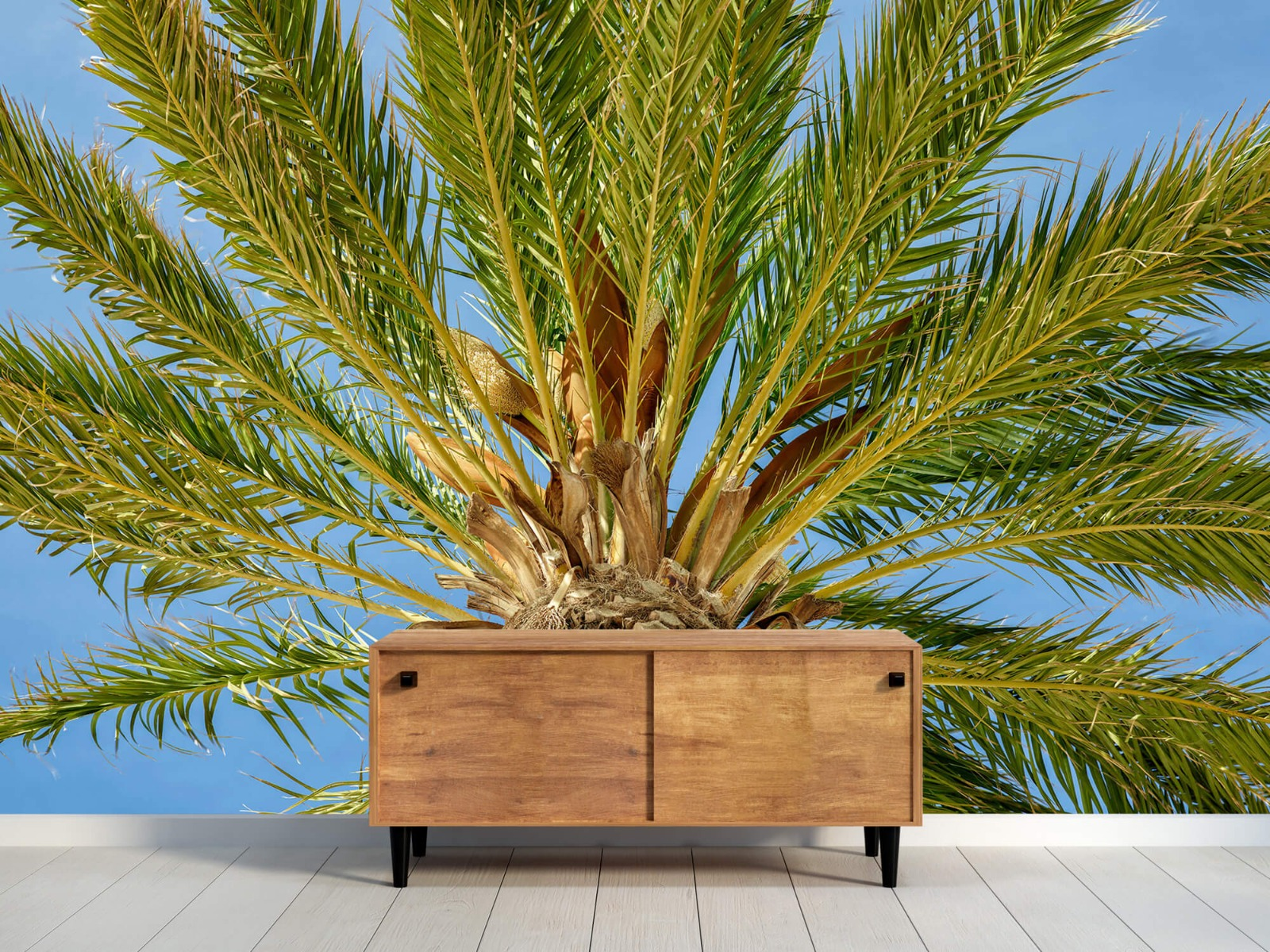 Palmbomen - Tropische palmboom - Tienerkamer 9