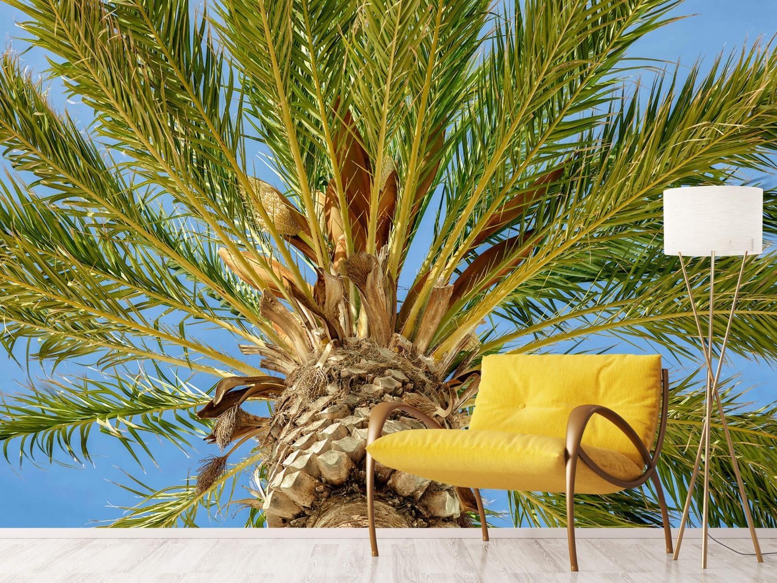 Palmbomen - Tropische palmboom - Tienerkamer 10