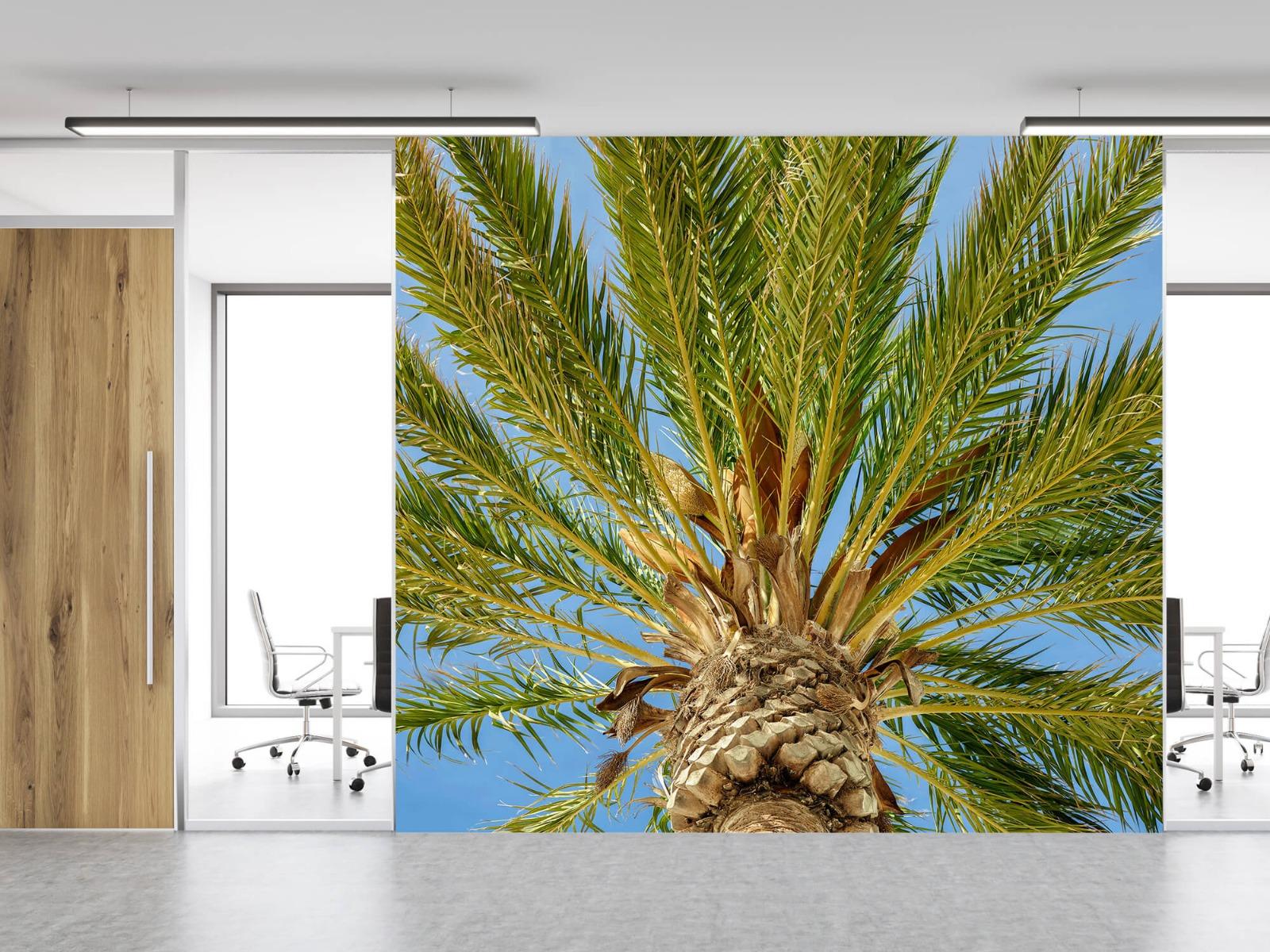 Palmbomen - Tropische palmboom - Tienerkamer 11