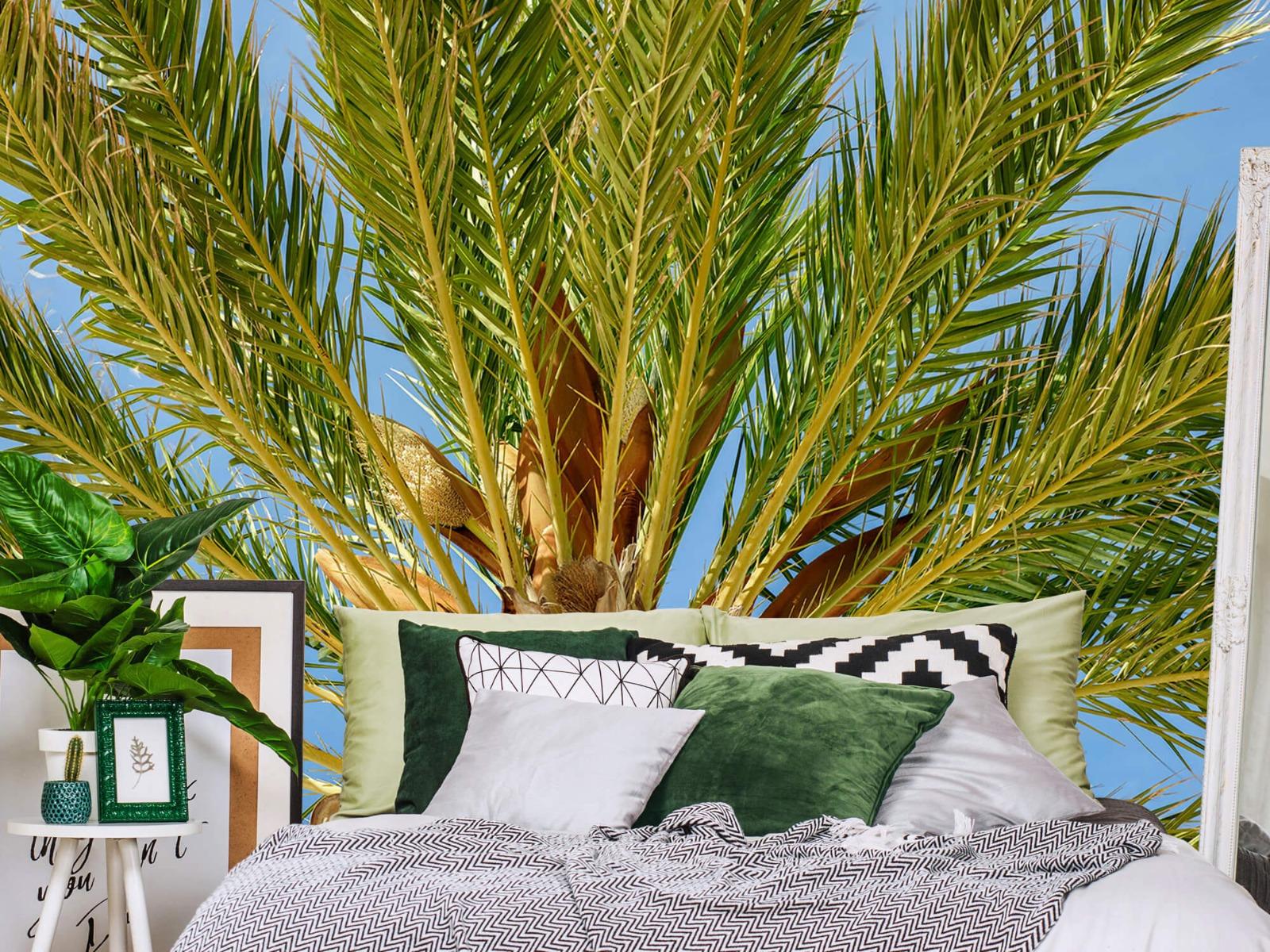 Palmbomen - Tropische palmboom - Tienerkamer 12
