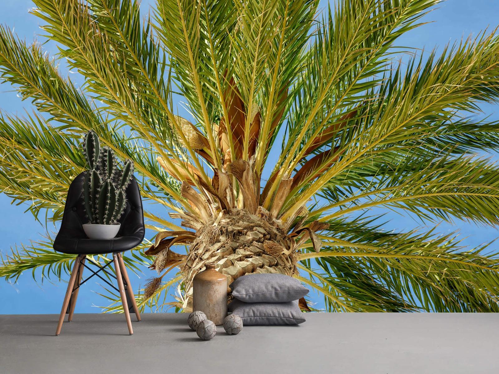 Palmbomen - Tropische palmboom - Tienerkamer 13