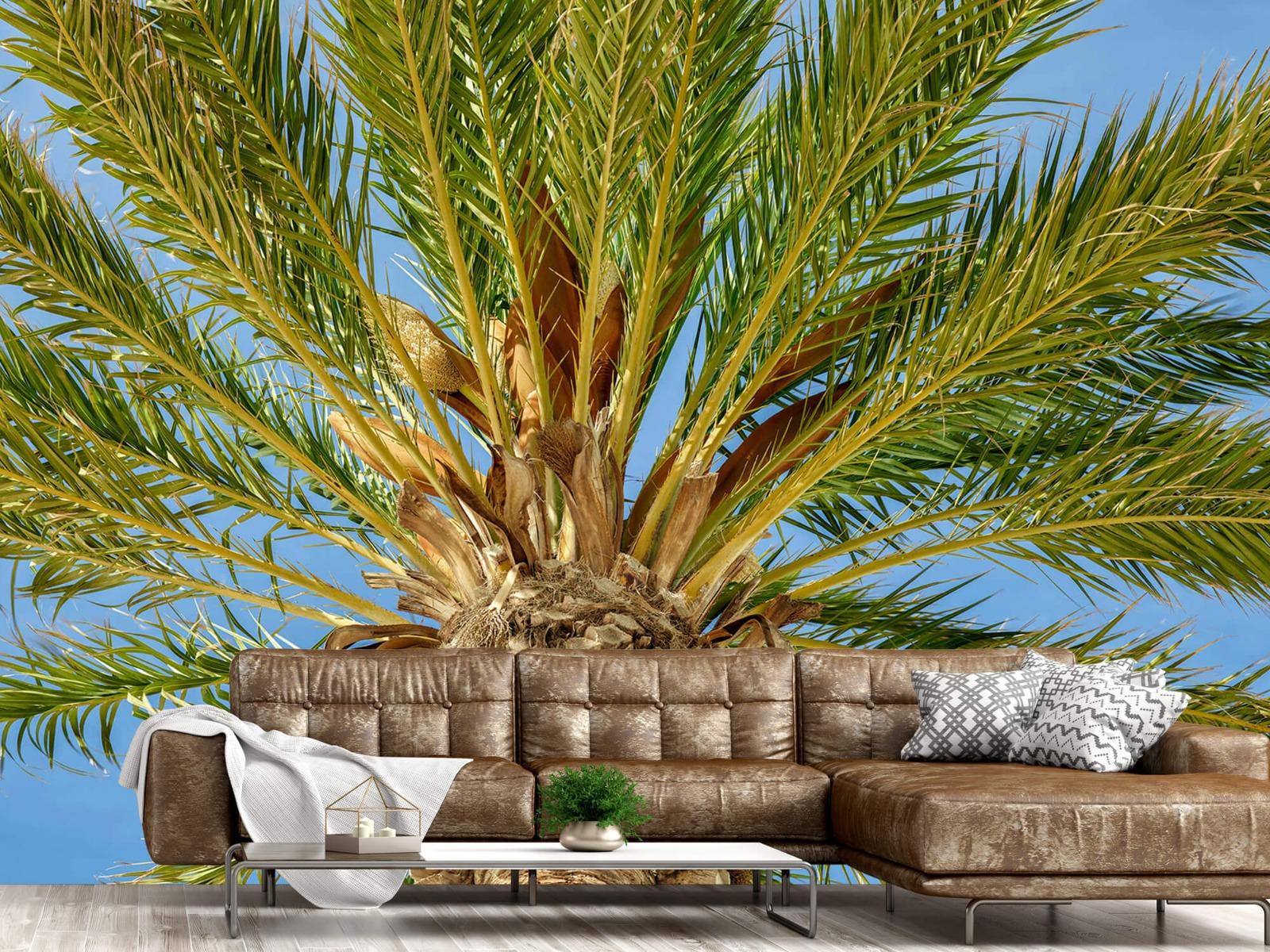 Palmbomen - Tropische palmboom - Tienerkamer 14
