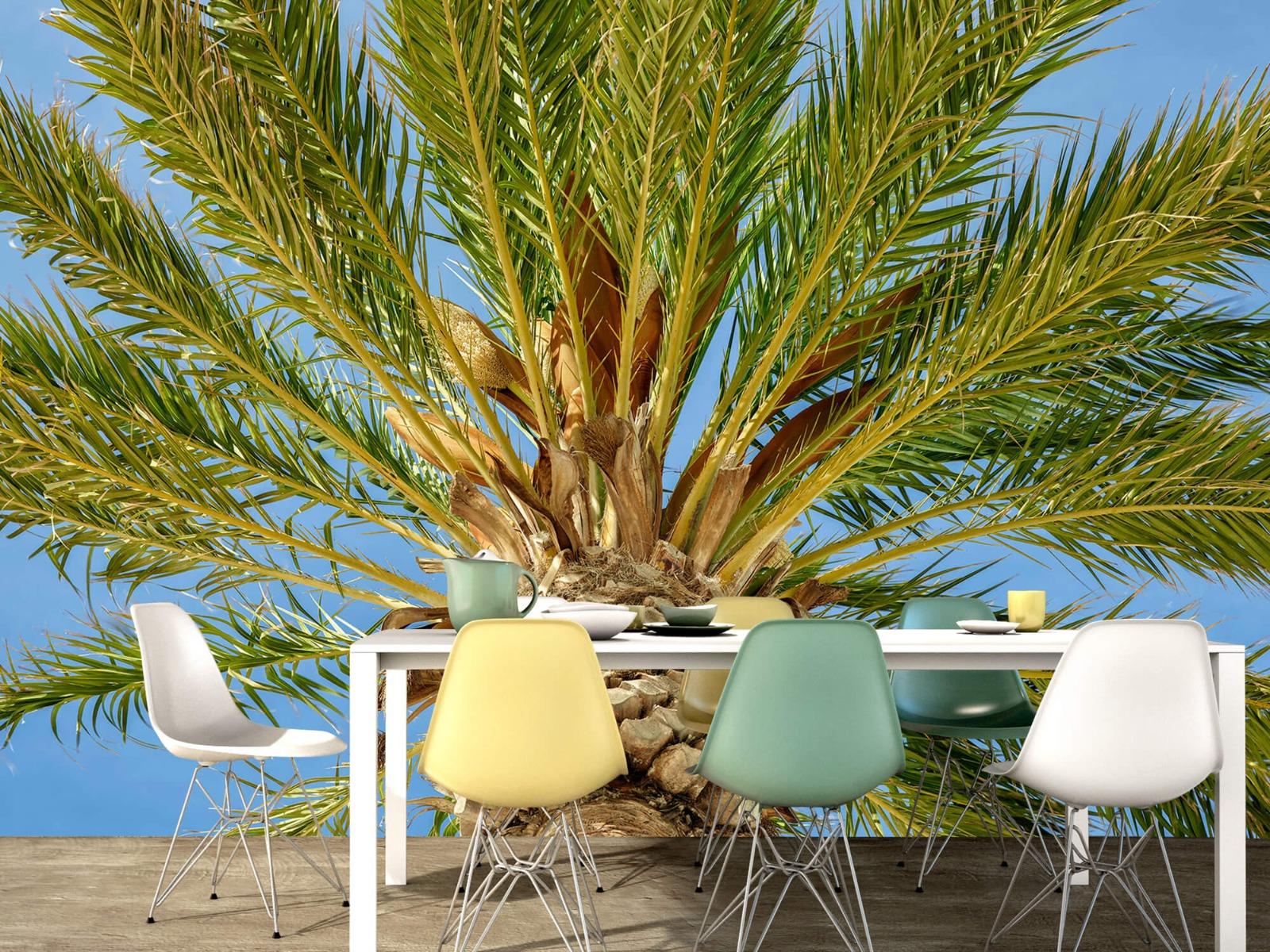 Palmbomen - Tropische palmboom - Tienerkamer 15