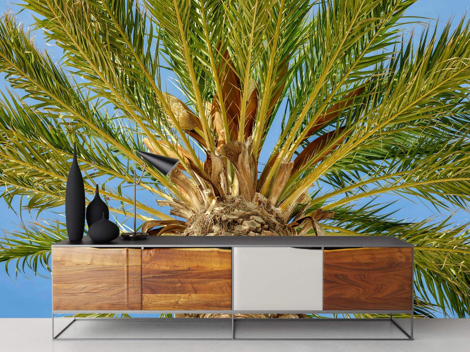 Palmbomen - Tropische palmboom - Tienerkamer 16