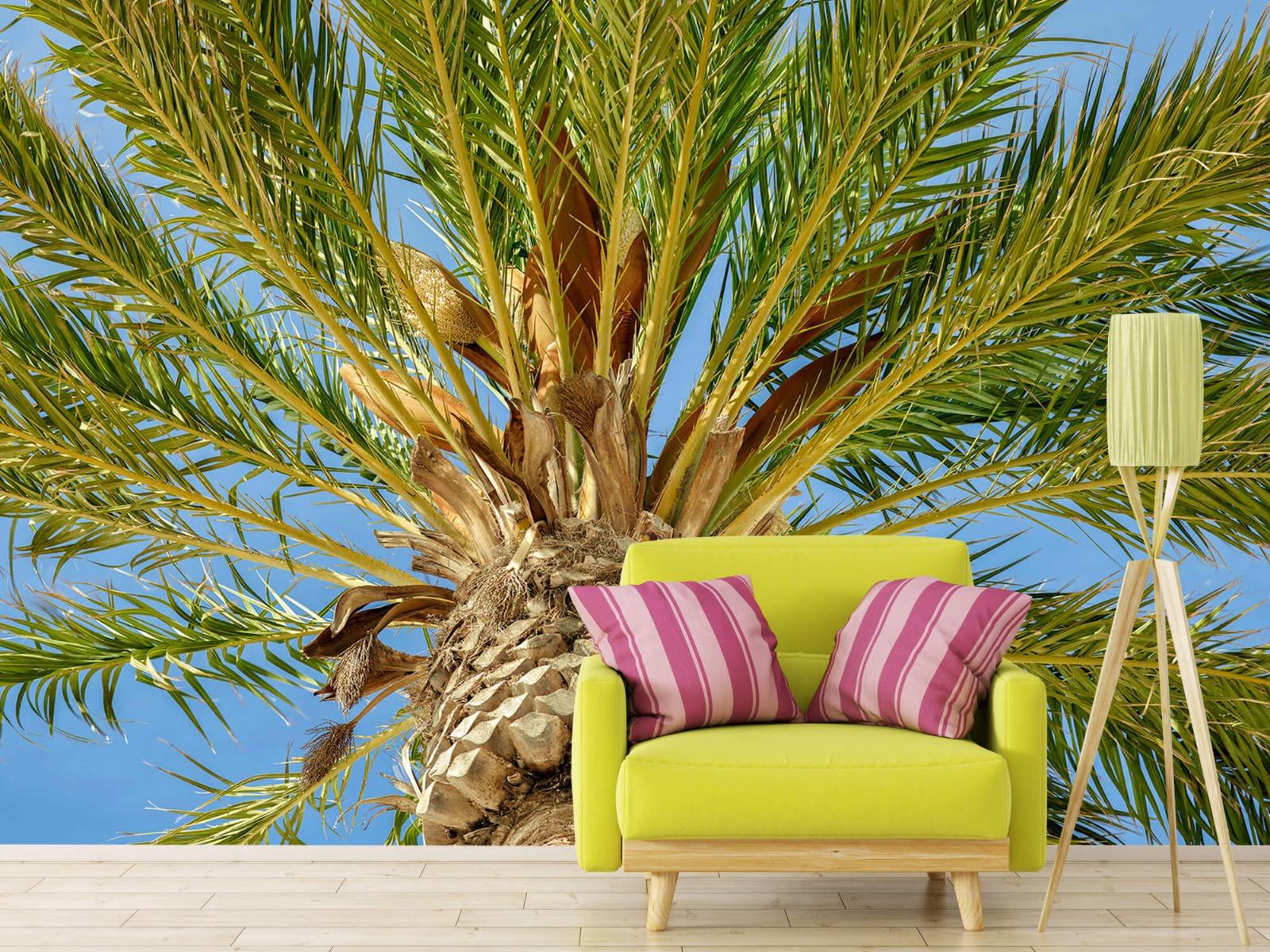 Palmbomen - Tropische palmboom - Tienerkamer 17